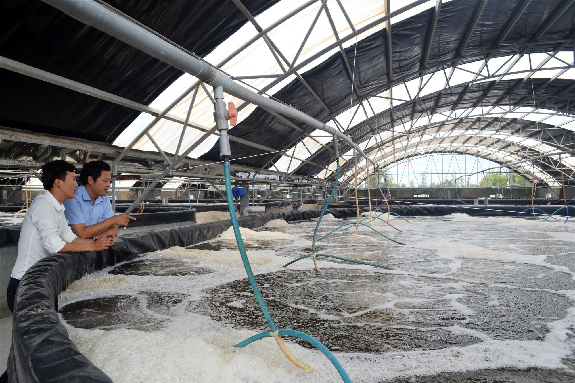 Ông Trần Công Thành đầu tư nuôi tôm công nghệ cao đem lại hiệu quả ở xã Tam Hòa (Núi Thành). Ảnh: VIỆT NGUYỄN