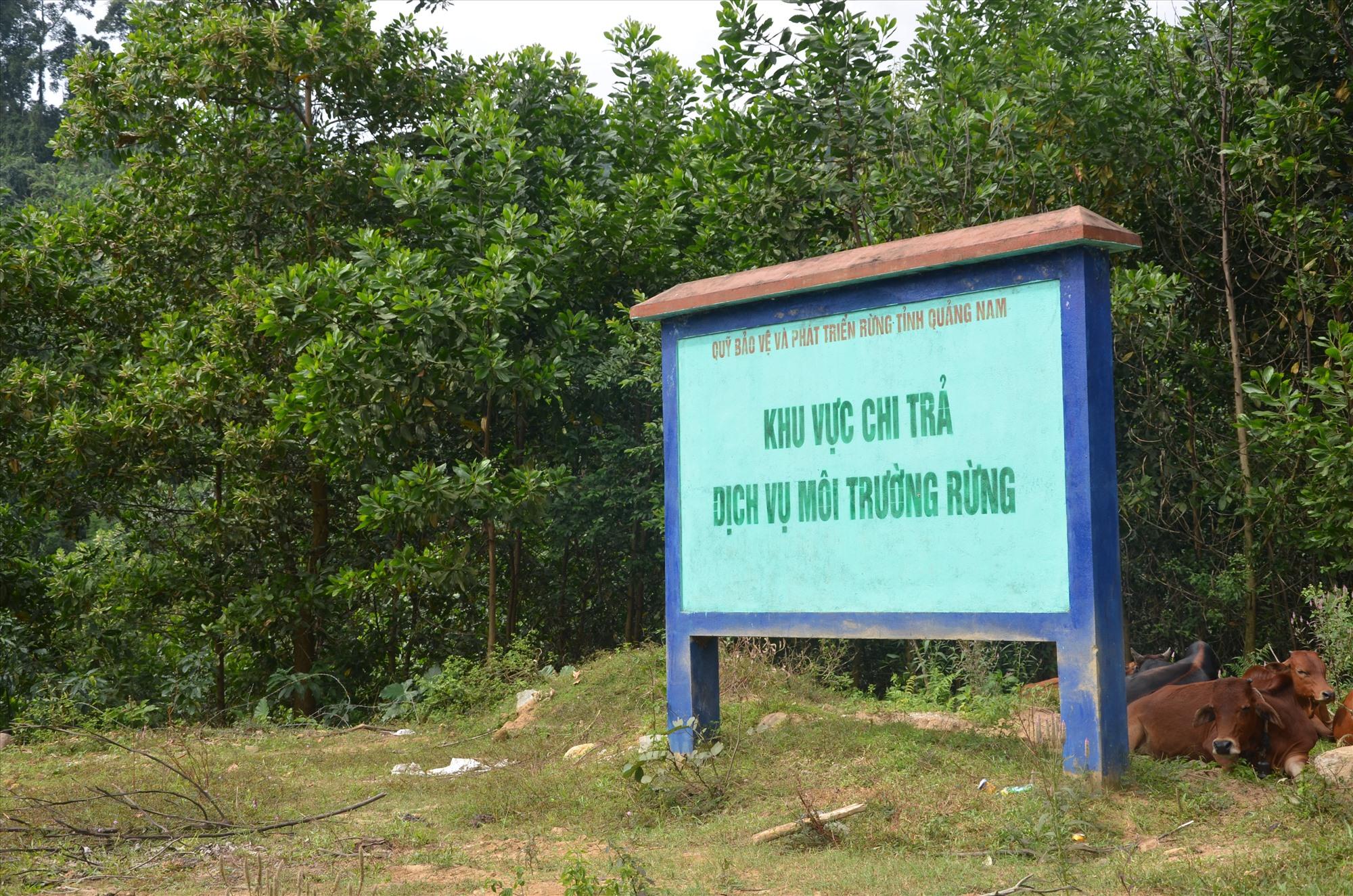 Một khu vực bảo vệ nghiêm ngặt trong khu dự trữ thiên nhiên Ngọc Linh thuộc xã Trà Tập, Nam Trà My. Ảnh: H.P
