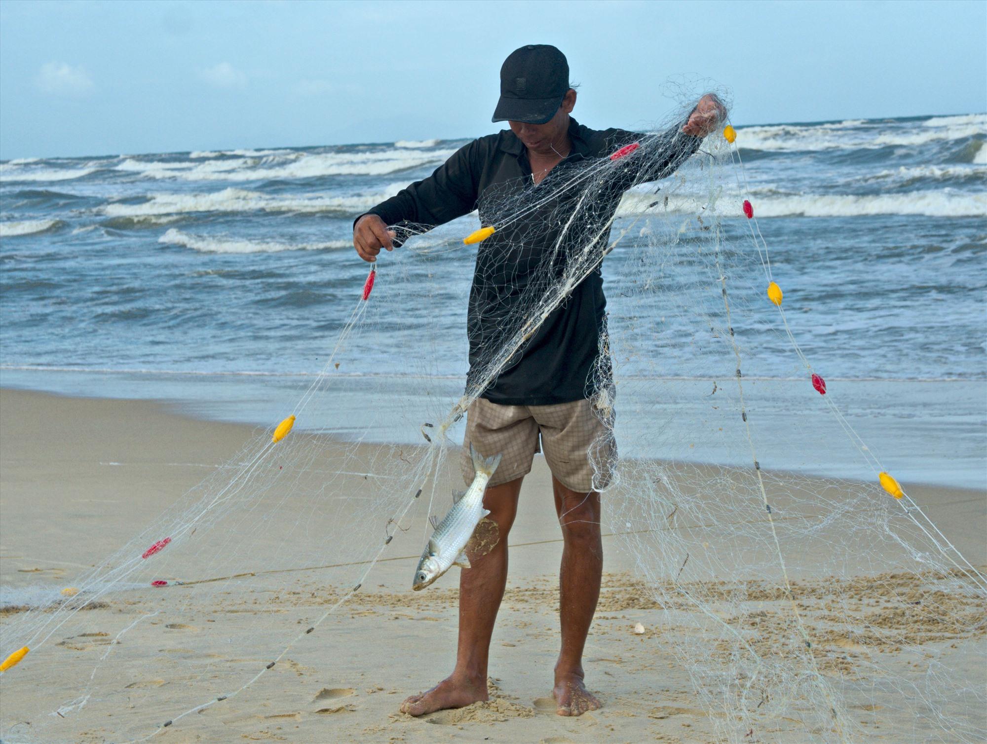 Cá đối rất dễ bị mắc lưới. Ảnh: NGUYỄN ĐIỆN NGỌC