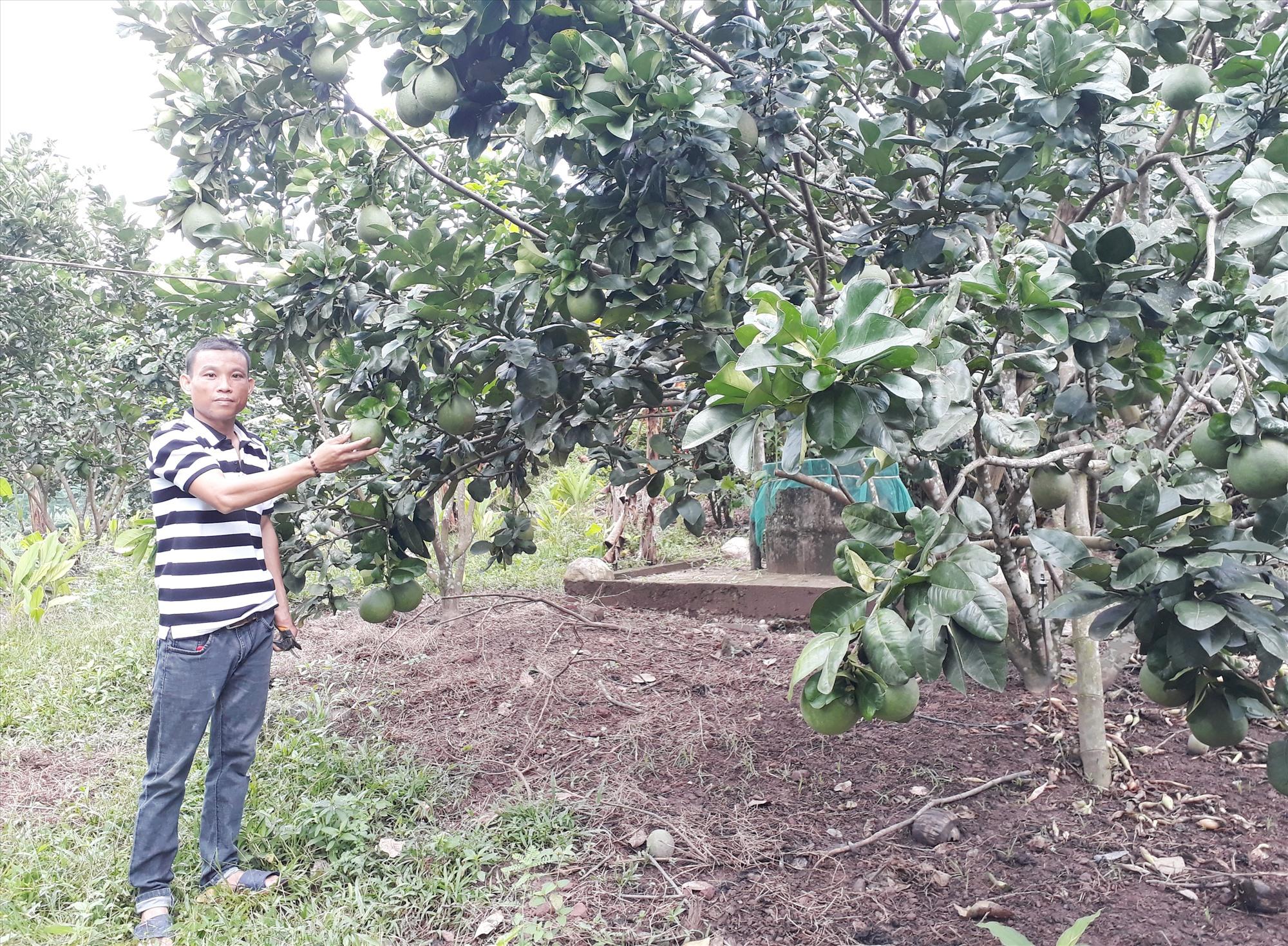 Anh Đặng Văn Minh chăm sóc vườn cây ăn quả của gia đình. Ảnh: L.T