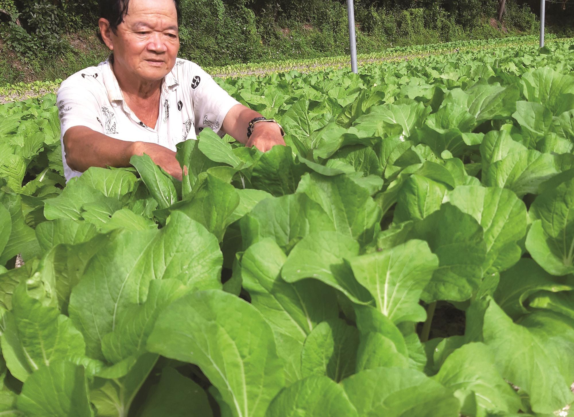Ông Trịnh Tấn Ưu cho rằng, rau quả cần bớt phụ thuộc vào thị trường Trung Quốc. Ảnh: VIỆT NGUYỄN