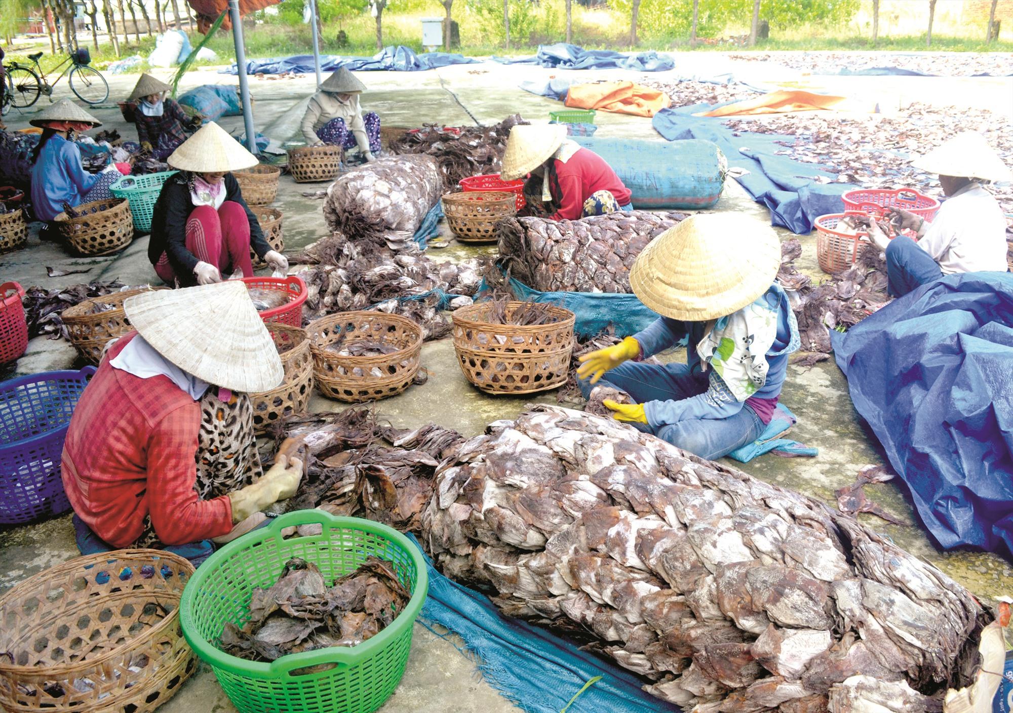 Do phụ thuộc vào thị trường Trung Quốc, sản phẩm mực xà đang bị ách tắc.Ảnh: Q.V