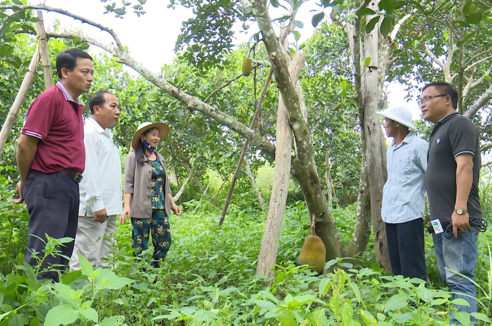 Vườn cây ăn quả của ông Nguyễn Thanh Hạt ở thôn Thái Chấn Sơn (Đại Hưng, Đại Lộc) cho thu nhập hằng năm gần 700 triệu đồng.