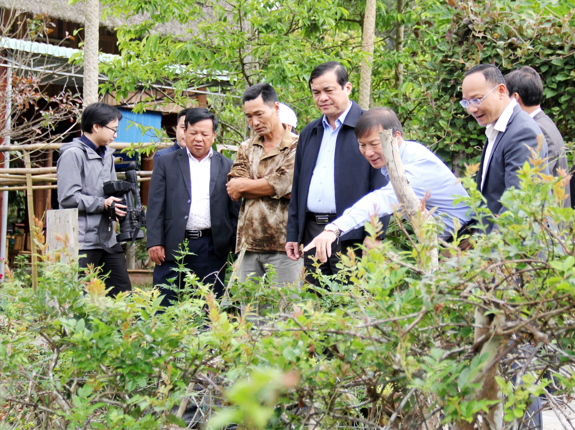 Đông Giang định hướng tiếp tục giảm nghèo, phát triển kinh tế từ các sản vật đặc trưng của địa phương. TRONG ẢNH: Đoàn công tác của Tỉnh ủy tham quan vườn trồng chè dây razéh tại xã Tư. Ảnh: ALĂNG NGƯỚC