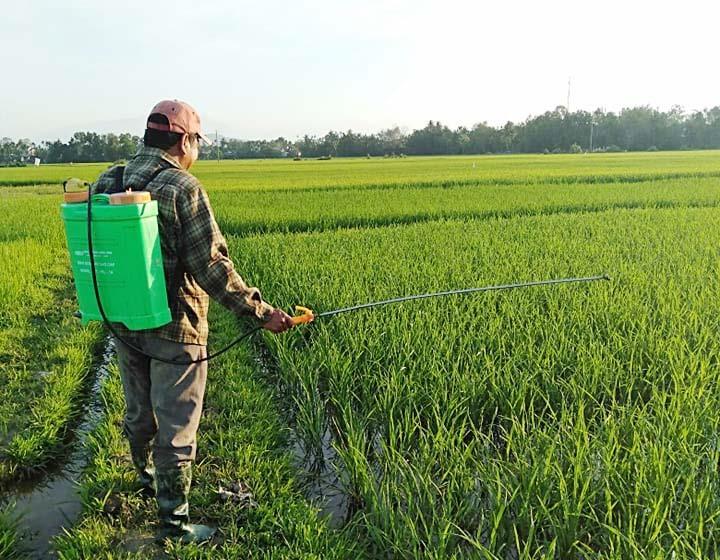Người dân tại xã Tam Xuân 2 đi thăm đồng, bón phân và phun thuốc diệt sâu cuốn lá nhỏ.