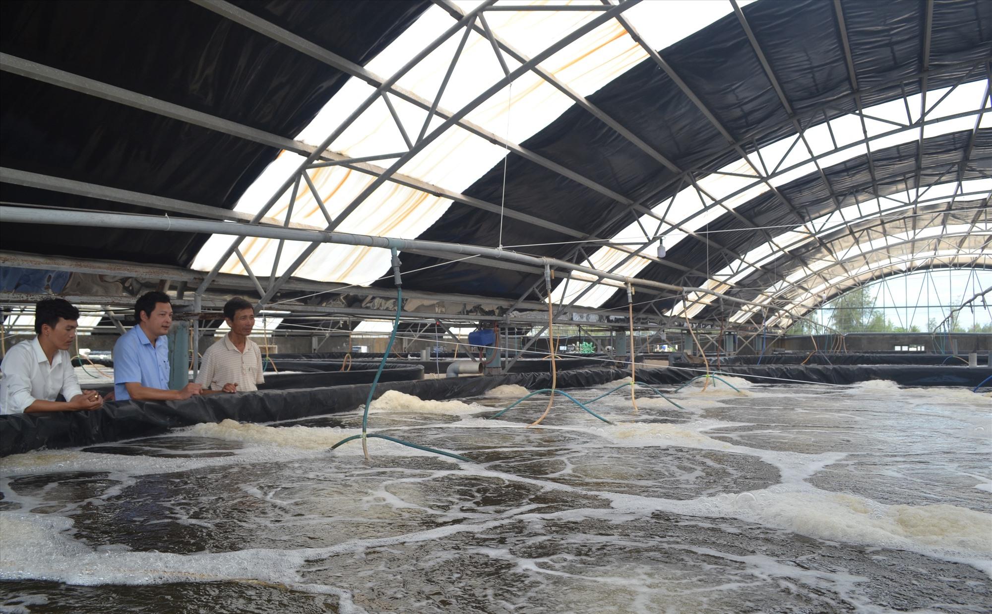 Mô hình nuôi tôm công nghiệp của ông Trần Công Thành. Ảnh: V.N