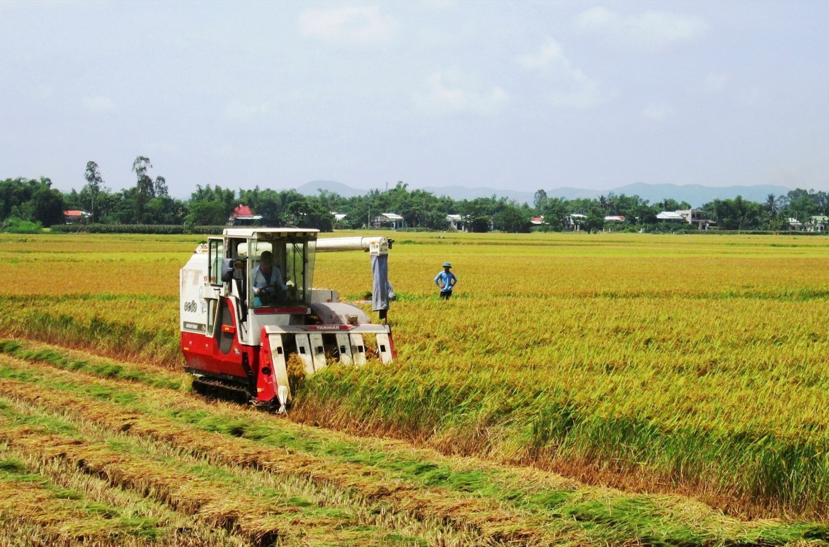 Nhờ chú trọng công tác dồn điền đổi thửa, thời gian qua Duy Phước đã hình thành nhiều mô hình cánh đồng mẫu lớn. Ảnh: V.S