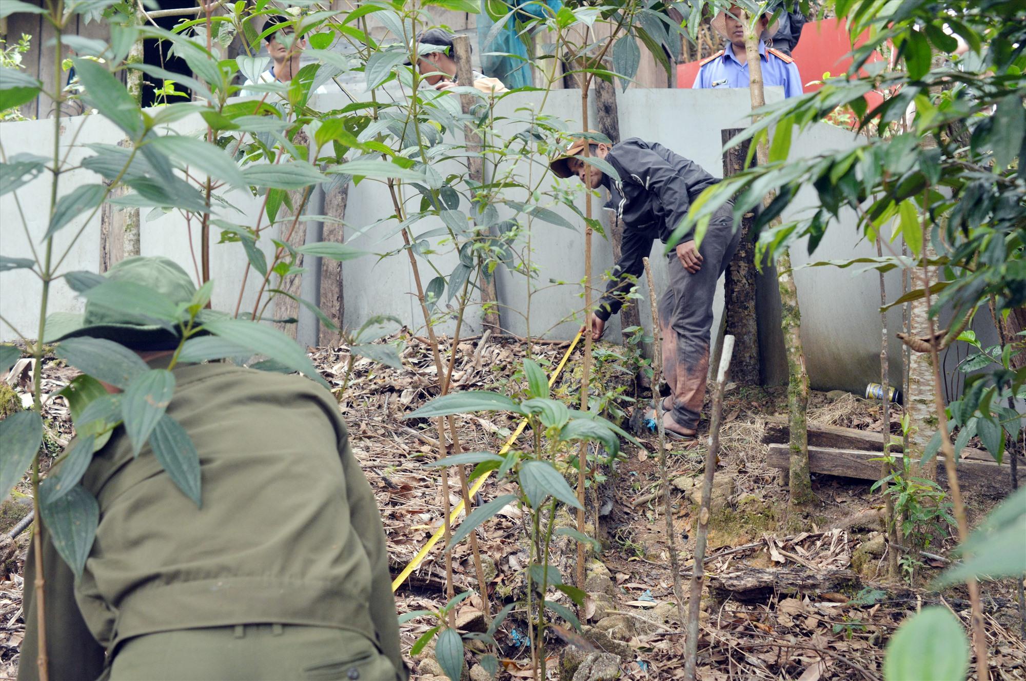 Lực lượng công an điều tra, làm rõ vụ trộm cắp sâm Ngọc Linh tại xã Trà Linh. (Ảnh do Công an huyện Nam Trà My cung cấp)