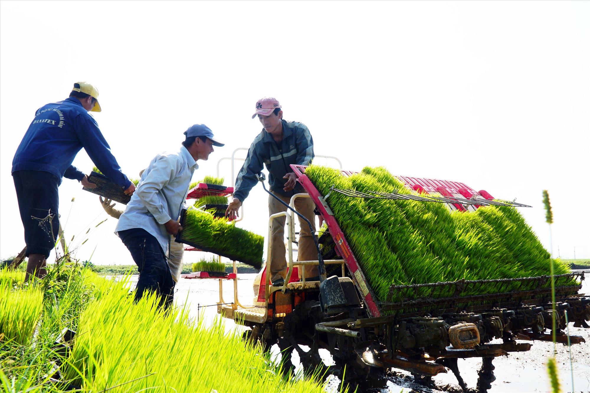 Trong 10 năm qua, Quảng Nam từng bước hiện đại hóa nền nông nghiệp. Ảnh: N.KẾT