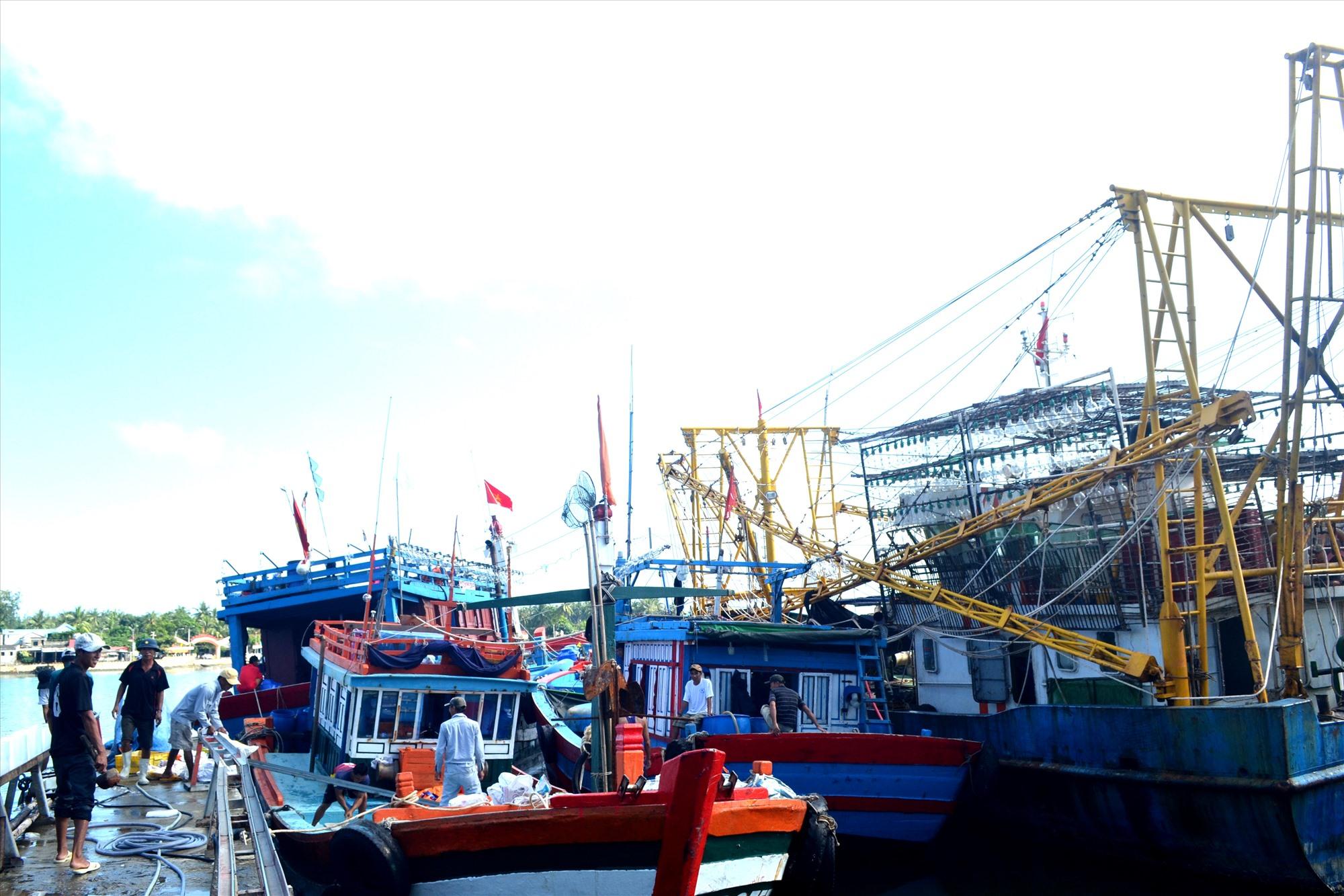 Nhiều tàu cá đóng mới từ vốn vay của Quỹ HTND Quảng Nam làm ăn hiệu quả. Ảnh: VIỆT NGUYỄN
