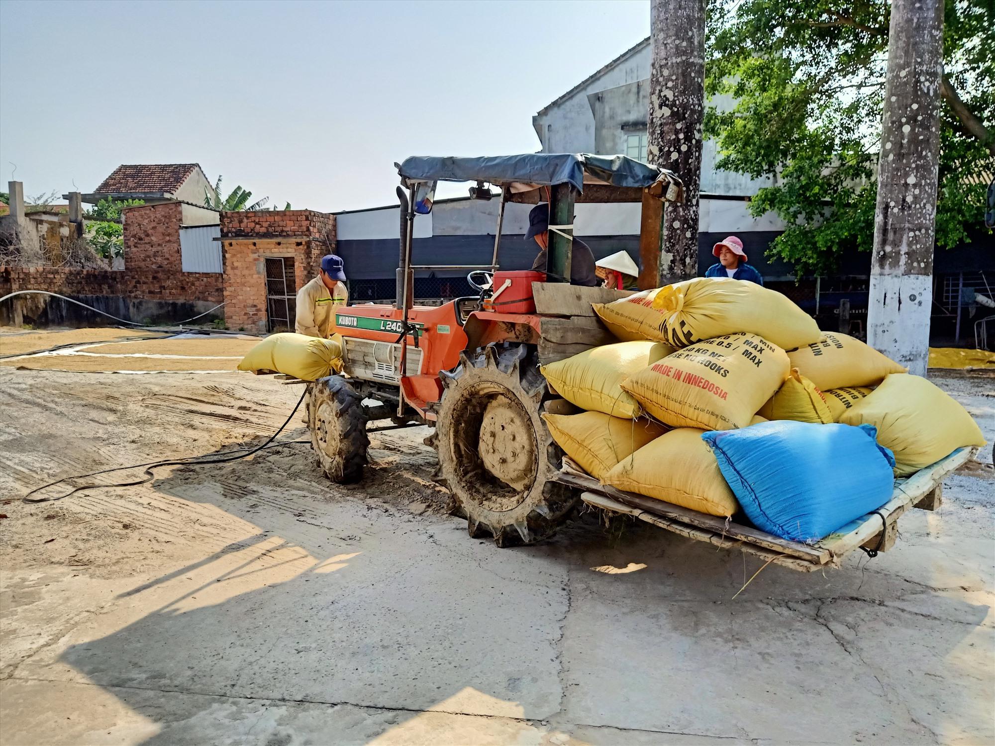 Vụ lúa đông xuân năm nay ở Đại Lộc được mùa, có nơi năng suất đạt 70 tạ/ha. Ảnh: HOÀNG LIÊN