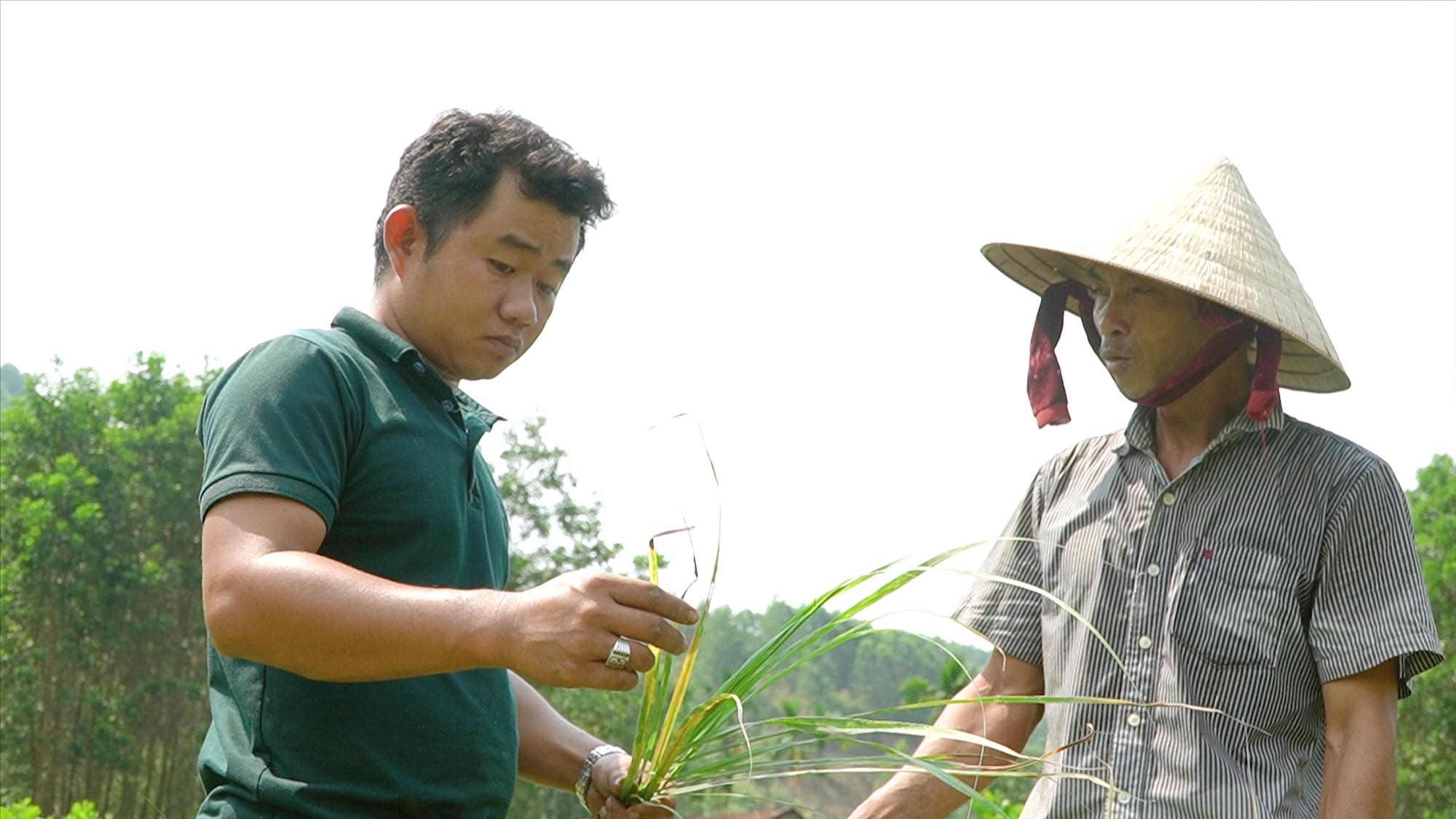 Anh Trần Hùng Nam (bên trái) thu gom cây sả chanh của địa phương để sản xuất tinh dầu. Ảnh: PHAN VINH