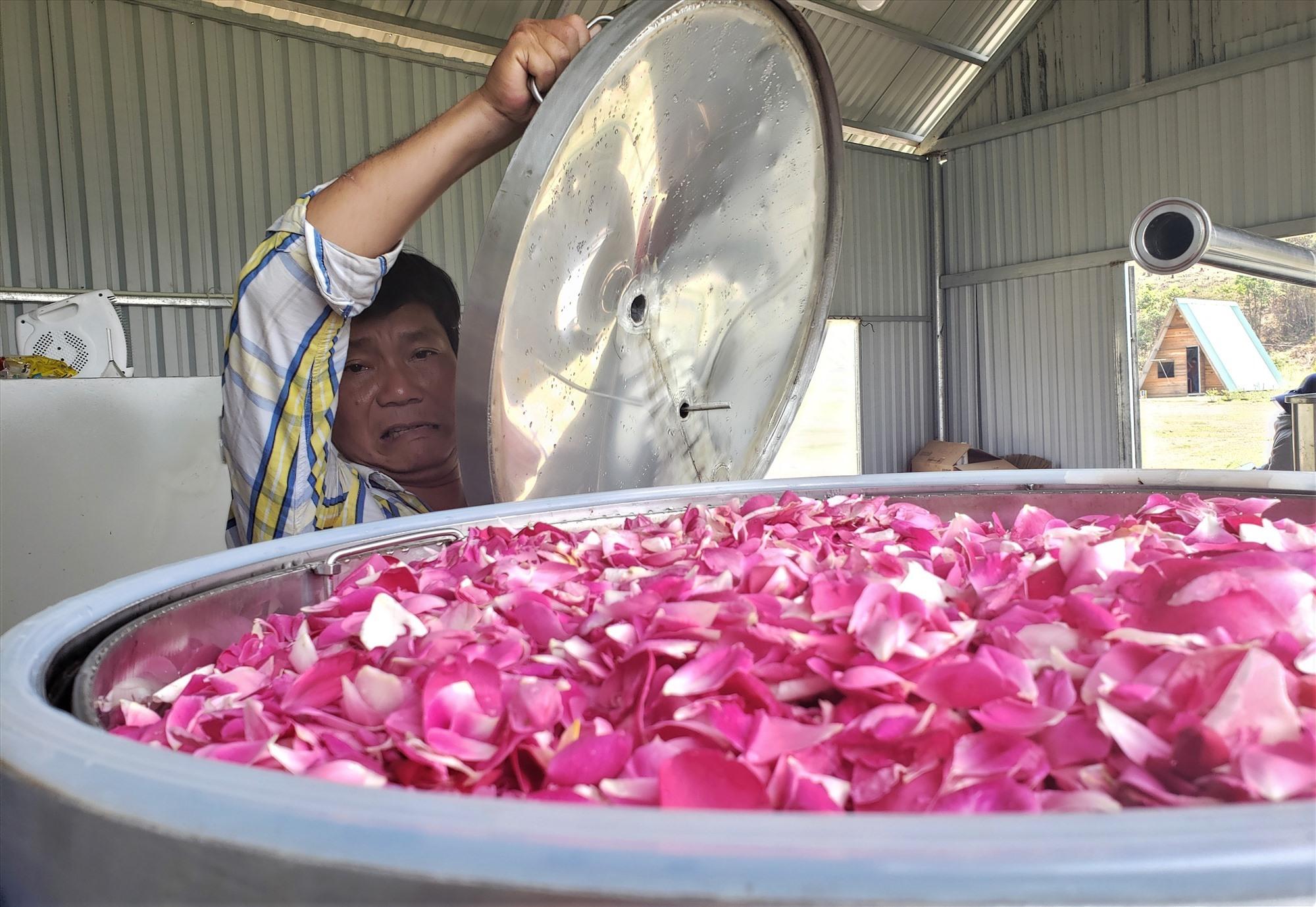 Hoa hồng được đưa vào nồi để chế xuất toner hoa hồng. Ảnh. THANH THẮNG