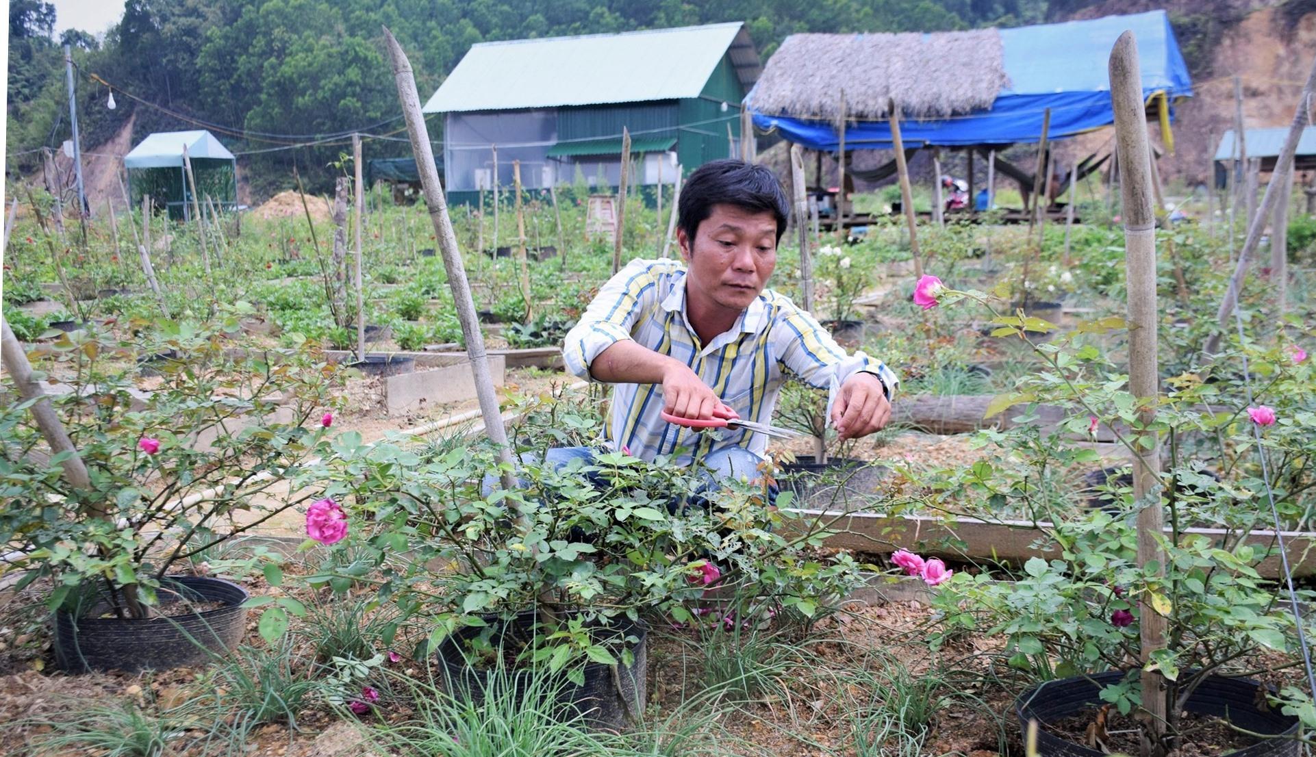 Anh Nguyễn Xuân Minh chăm sóc vườn hoa hồng. Ảnh: THANH THẮNG
