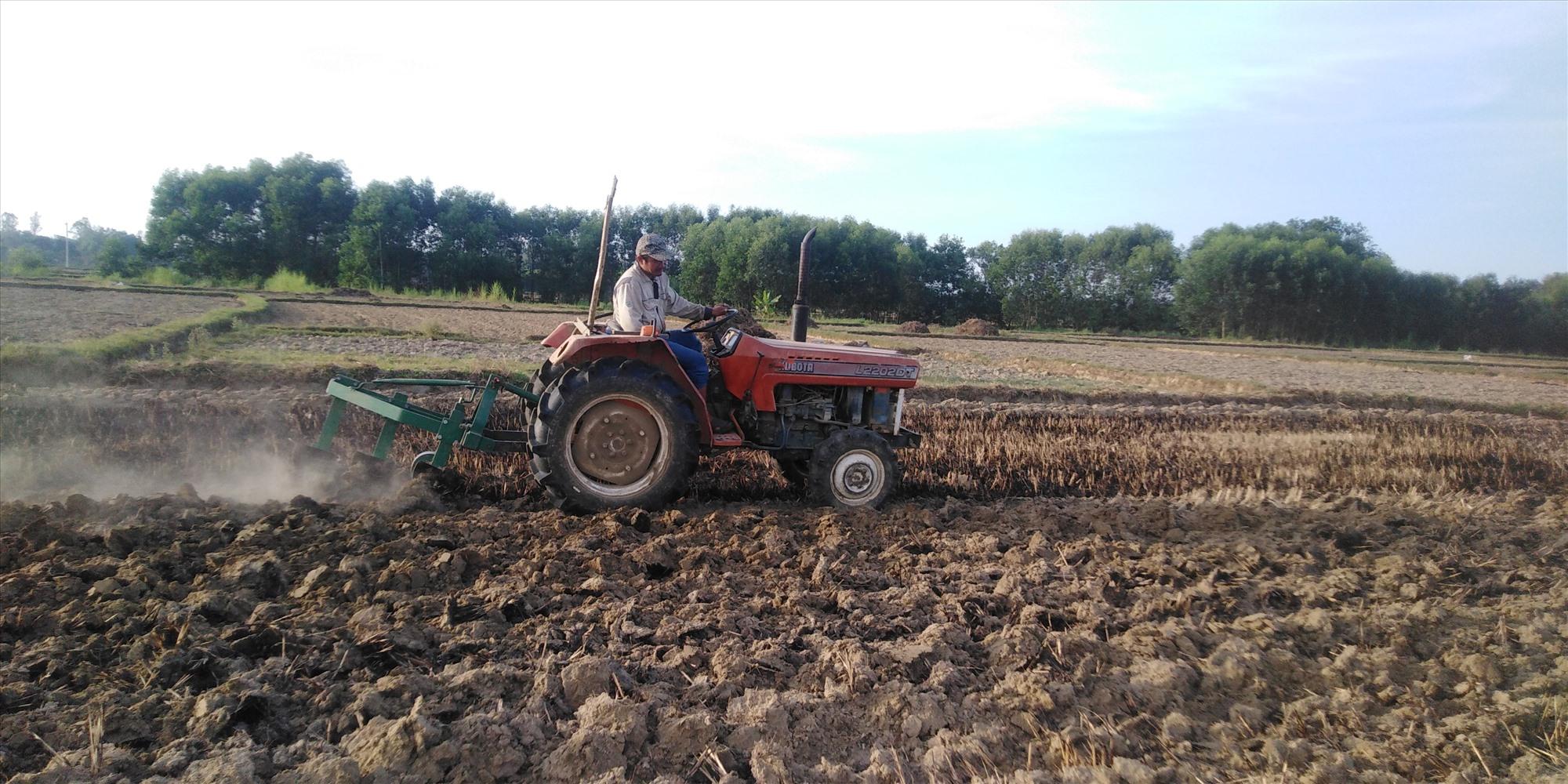 Người dân Bình Phú triển khai khâu làm đất để trồng đậu phụng trong vụ hè thu. Ảnh: T.T