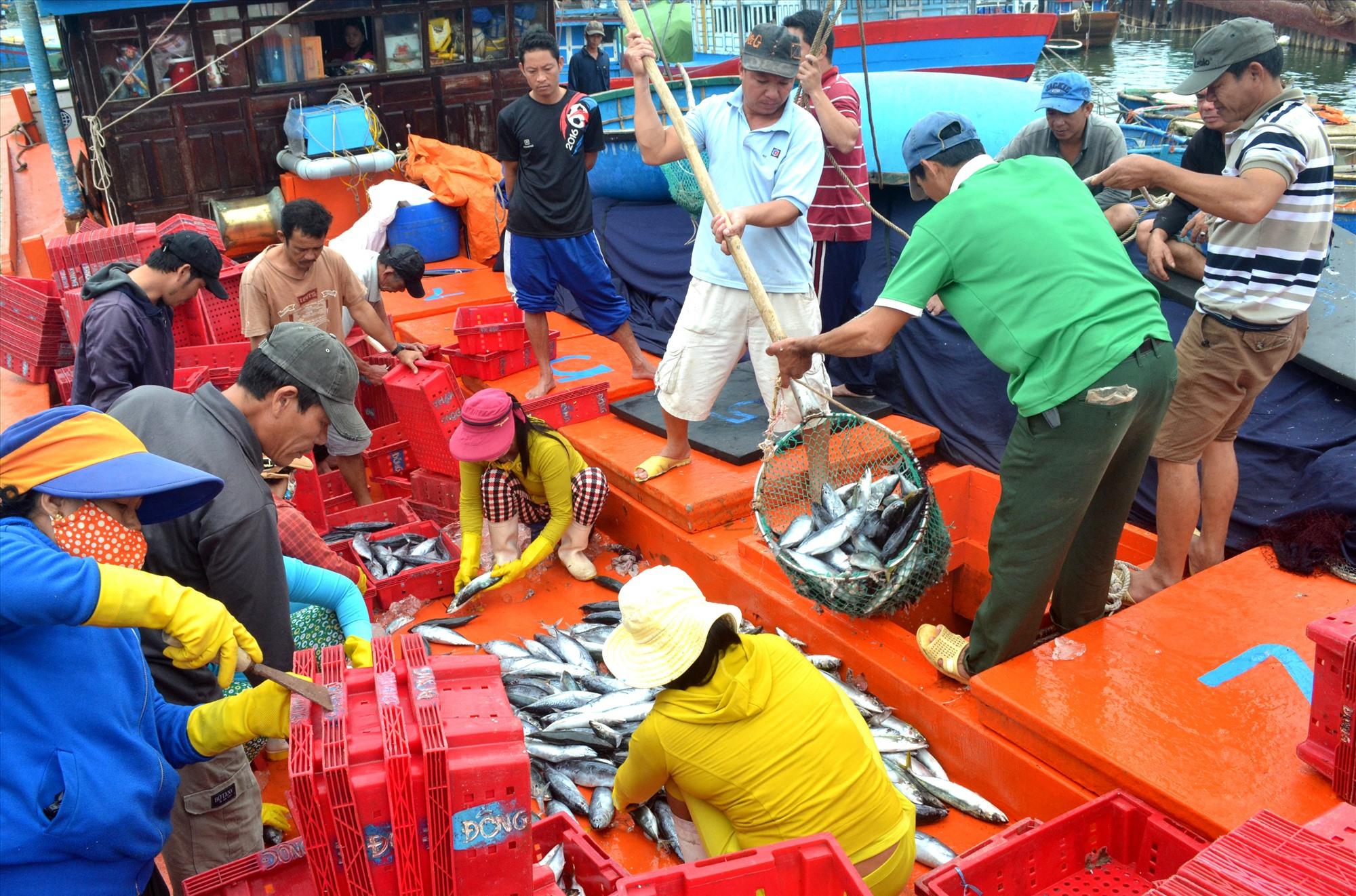 Ngư dân cập bến bán hải sản sau chuyến biển. Ảnh: VIỆT NGUYỄN