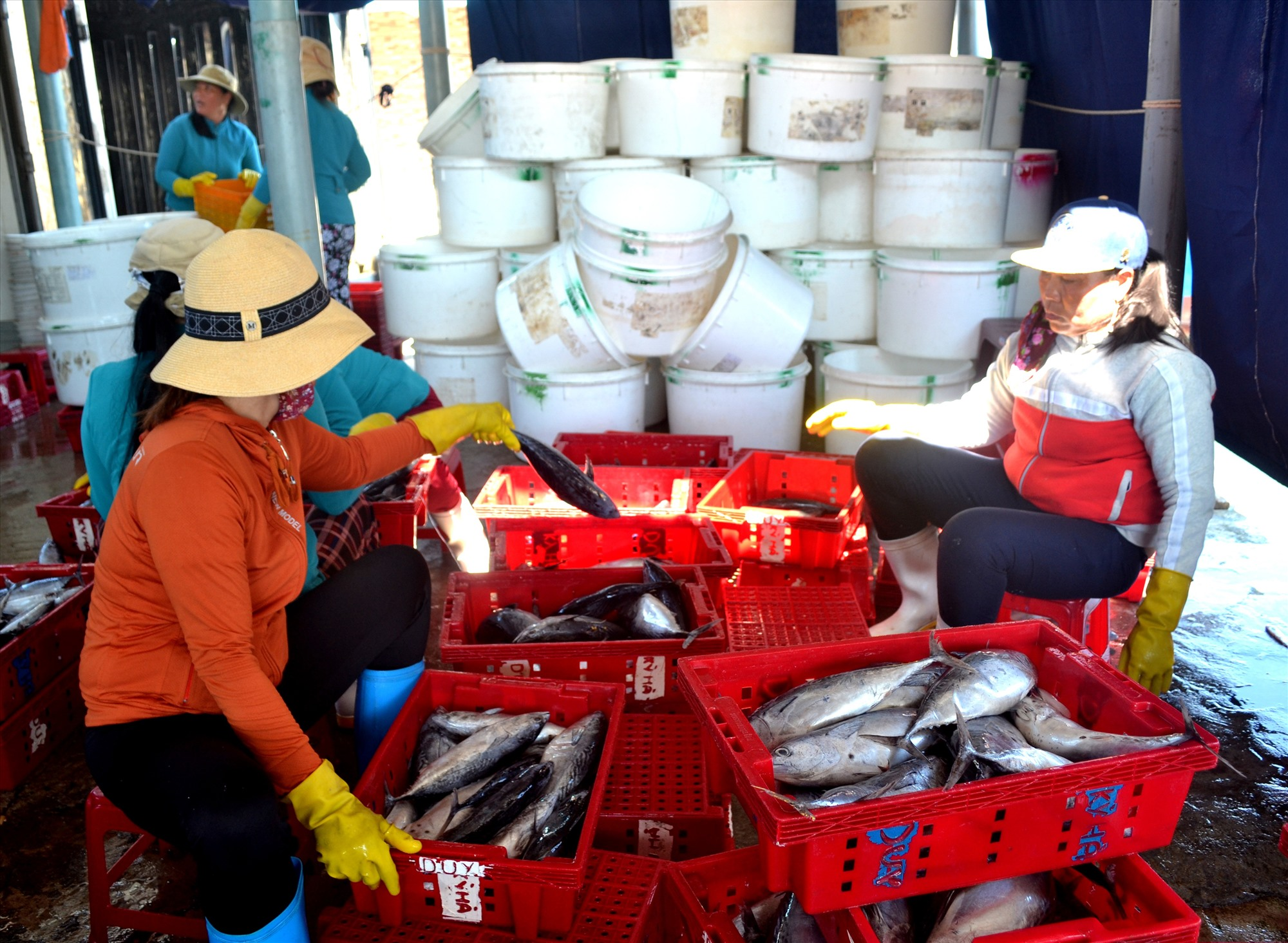 Hải sản được tàu cá đánh bắt bán ra với giá thấp. Ảnh: VIỆT NGUYỄN