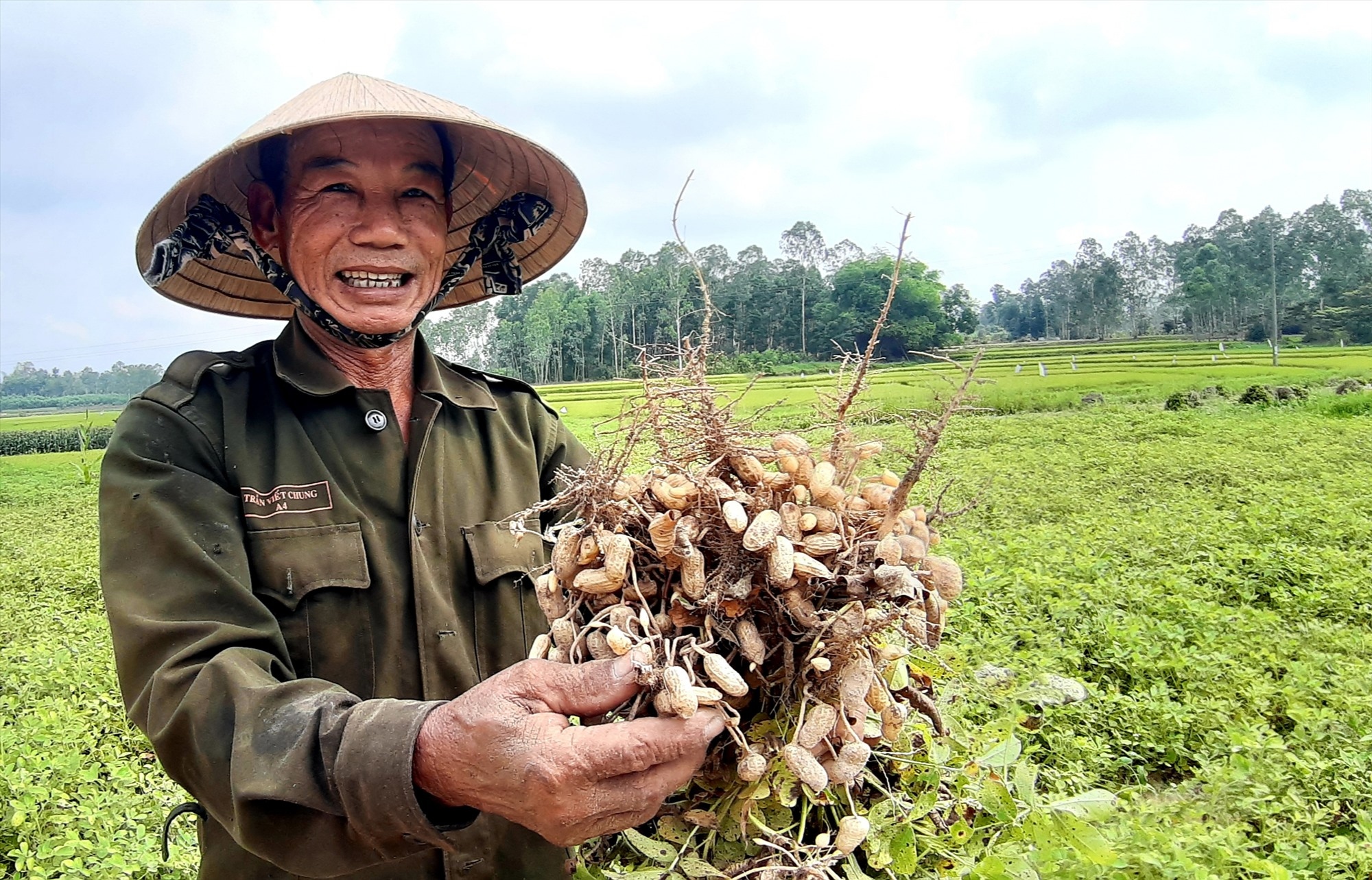 Đậu phụng là loại cây được nhiều địa phương lựa chọn trong việc thực hiện chủ trương chuyển đổi cây trồng trên đất lúa. Ảnh: T.R