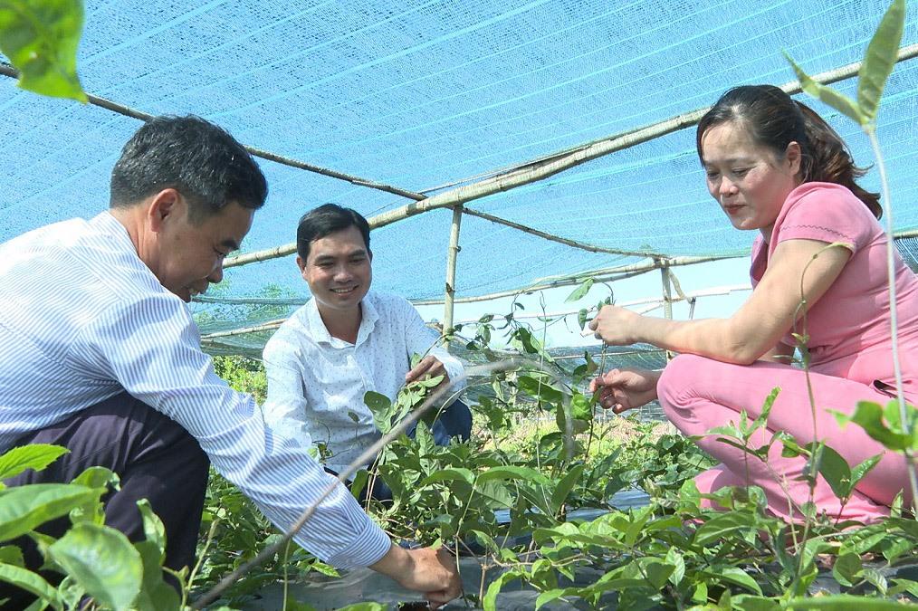 HTX Trung Toàn Phát đầu tư mô hình trồng ba kích tím trên đất đồi, rừng. Ảnh:T.B