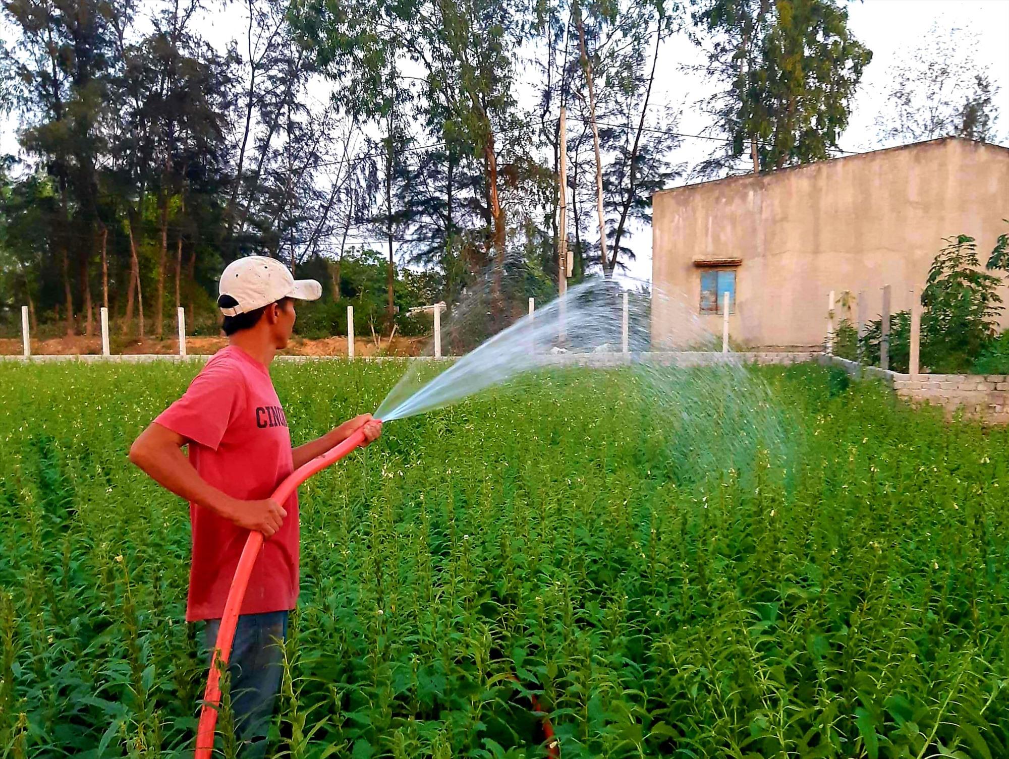 Nhiều địa phương vùng cát của tỉnh ưu tiên đầu tư thủy lợi hóa đất màu nhằm tạo điều kiện cho người dân phát triển sản xuất. Ảnh: T.R