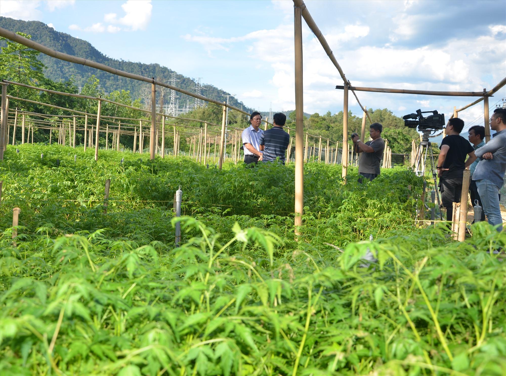 Các địa phương miền núi đang phát triển mạnh các cơ sở vườn ươm cây giống lâm nghiệp để phục vụ trồng rừng.