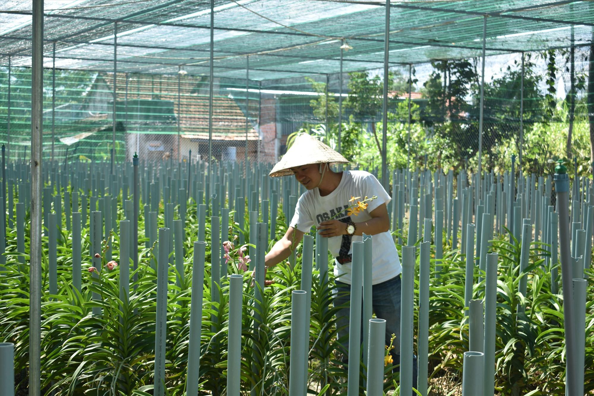 Huỳnh Đức Anh Thi với mô hình trồng rau thủy canh và hoa lan của mình. Ảnh: H.P
