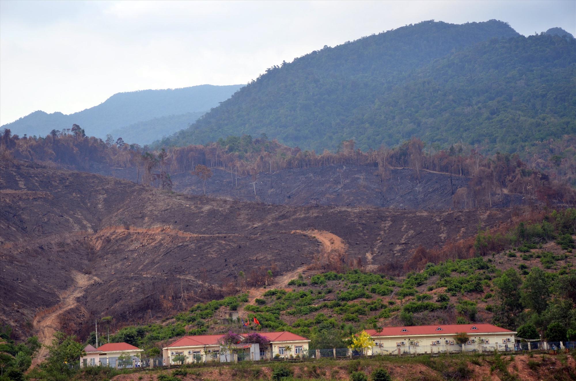 Vụ cháy rừng hồi tháng 5 thiêu rụi ít nhất 30ha rừng phòng hộ ở xã Mà Cooih (Đông Giang). Ảnh: TRẦN HỮU