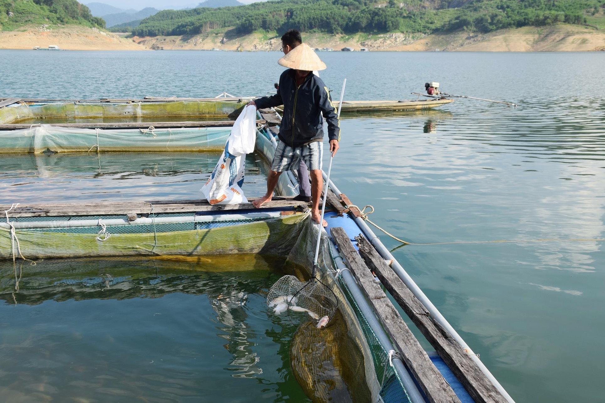 Người dân nuôi cá lồng bè ở thủy điện Sông Tranh 2 vớt cá chết đi tiêu hủy. Ảnh: THANH THẮNG
