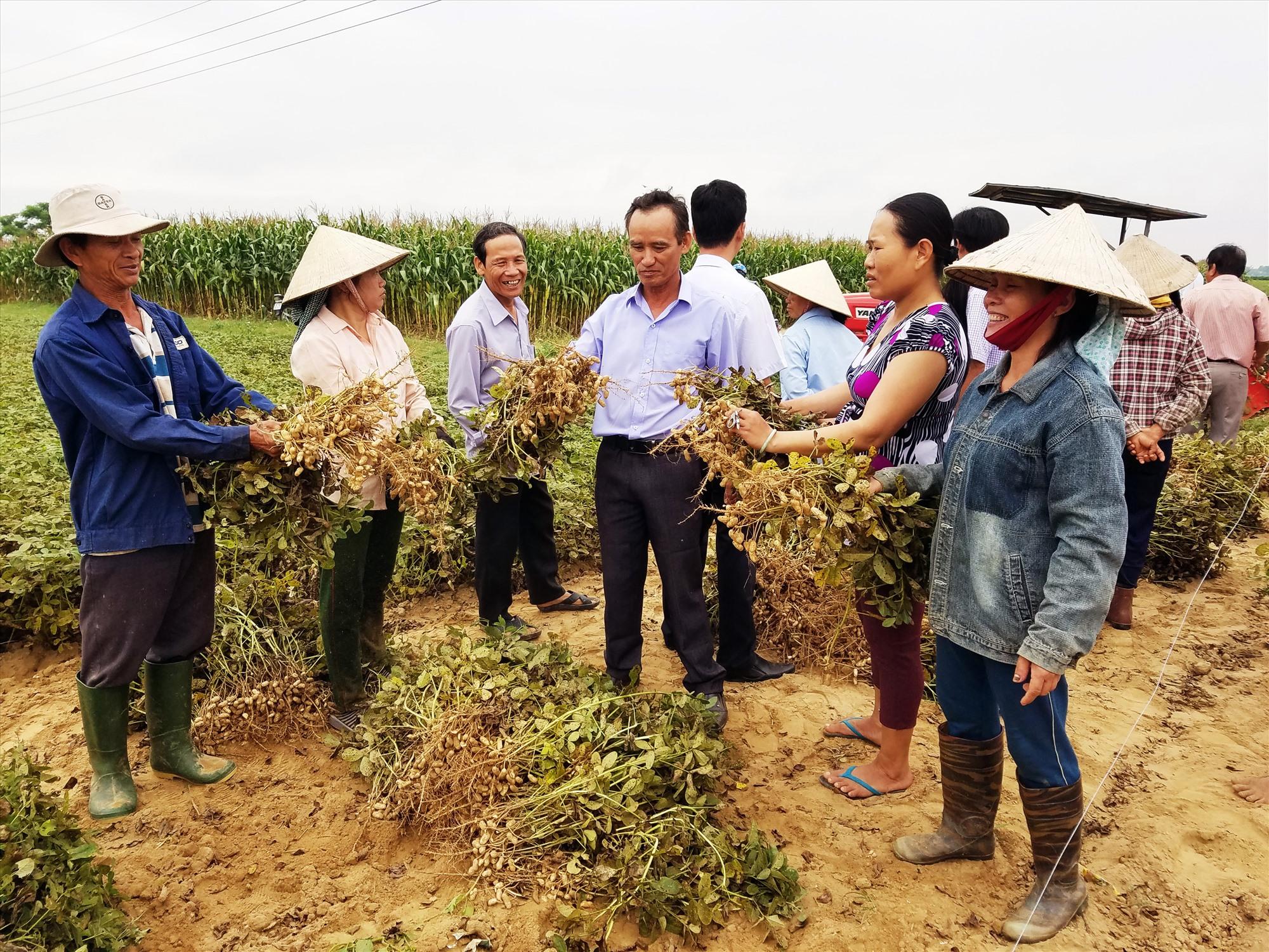 Mô hình liên kết sản xuất theo chuỗi giá trị giúp nông dân Điện Bàn yên tâm về đầu ra của nông sản. Ảnh: VĂN SỰ