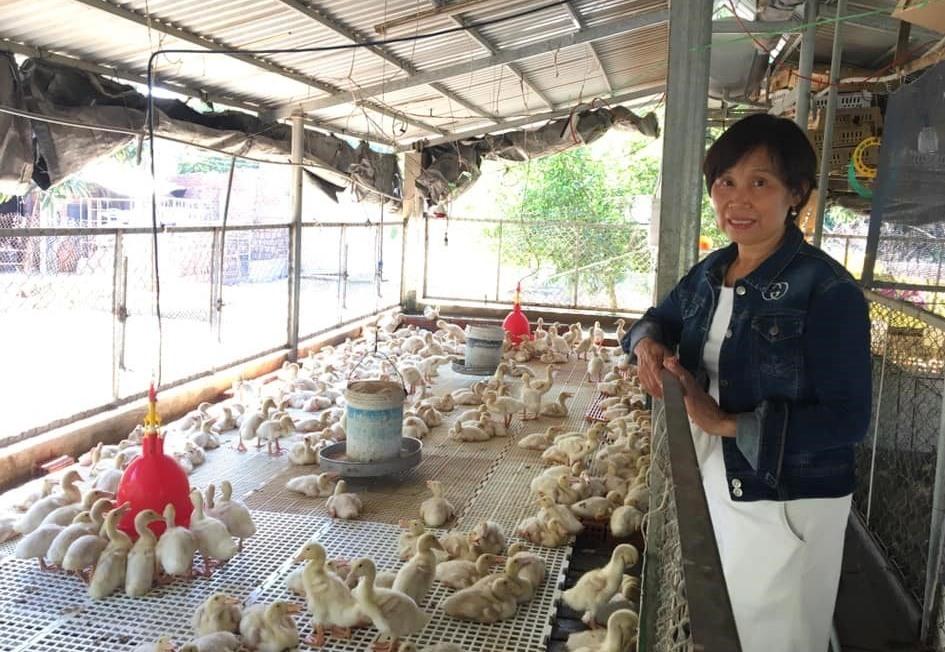 Chị Nguyễn Thị Thu hiện đang làm chủ cơ sở phân phối thức ăn chăn nuôi Hoàng Thu và trang trại chăn nuôi, trồng rau hữu cơ 3400m2 (đóng tại thị xã Điện Bàn). Ảnh: N.Trang