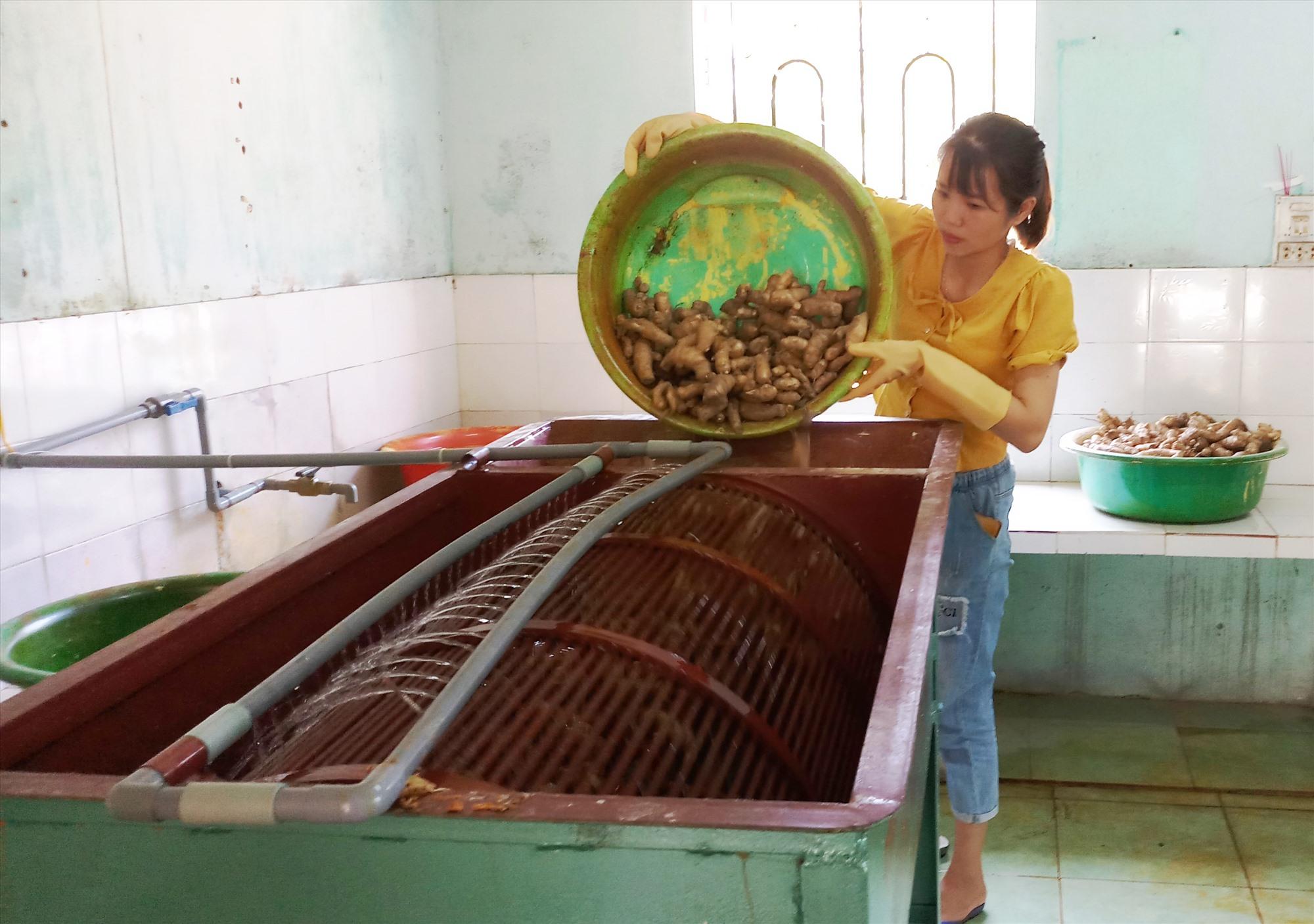 Tổ hợp tác sản xuất tinh bột ngải, tinh bột nghệ bước đầu hoạt động hiệu quả. Ảnh: N.Hưng