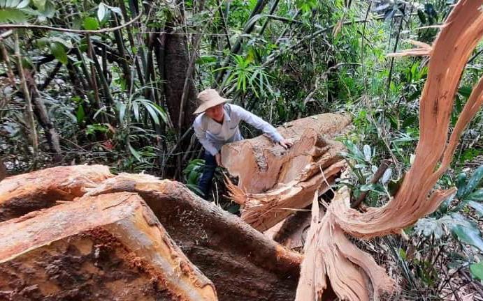 Hiện trường vụ phá rừng ở Bắc Trà My gần đây.