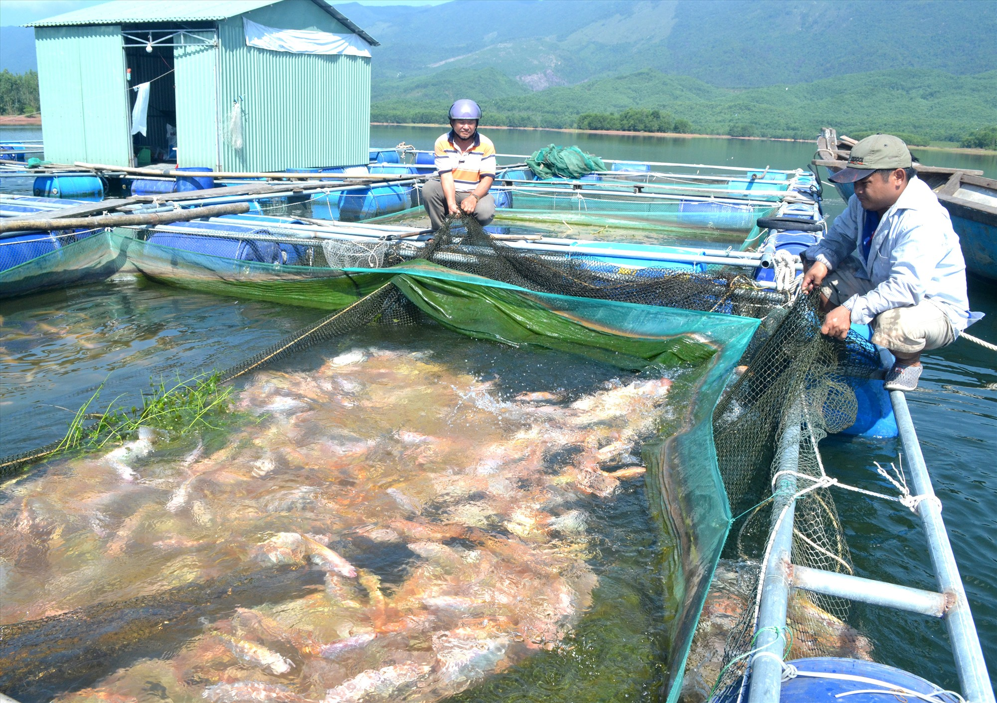 Biến đổi khí hậu khiến cho nuôi cá nước ngọt gặp nhiều khó khăn. Ảnh: V.N
