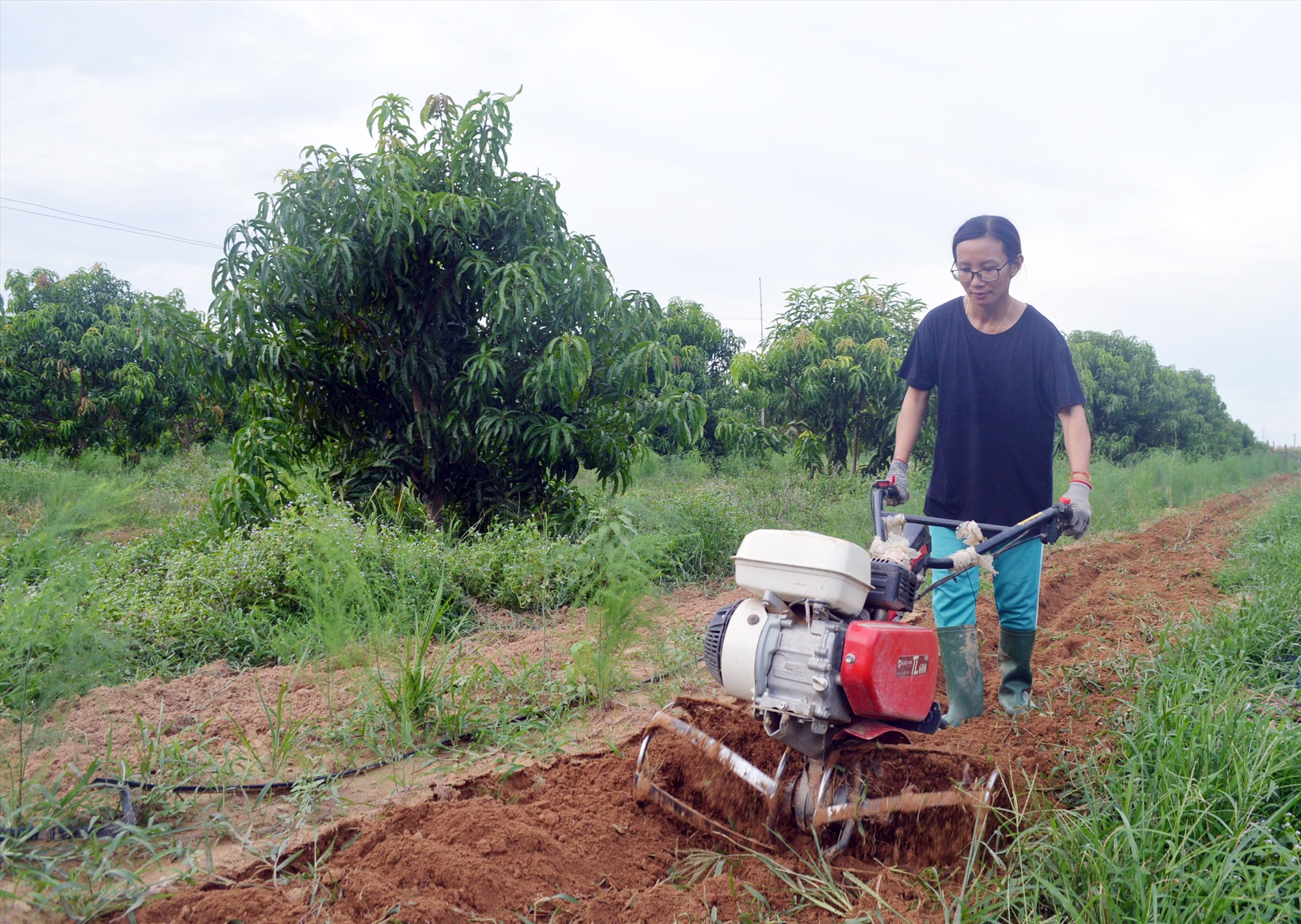 Đông Phương tự làm những công việc nặng nhọc trong nông trại của mình. Ảnh: V.L