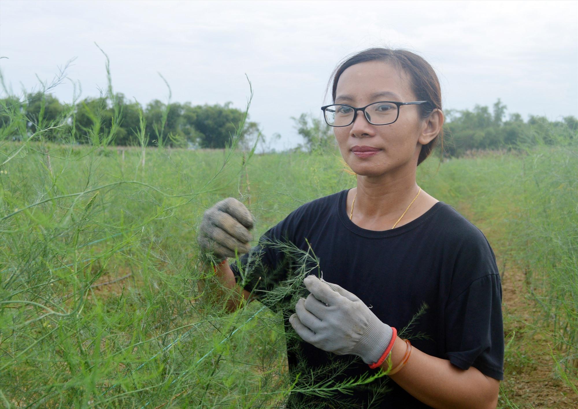 Cây măng tây được kỳ vọng sẽ đem về nguồn thu khá cho nông trại của Đông Phương. Ảnh: V.L