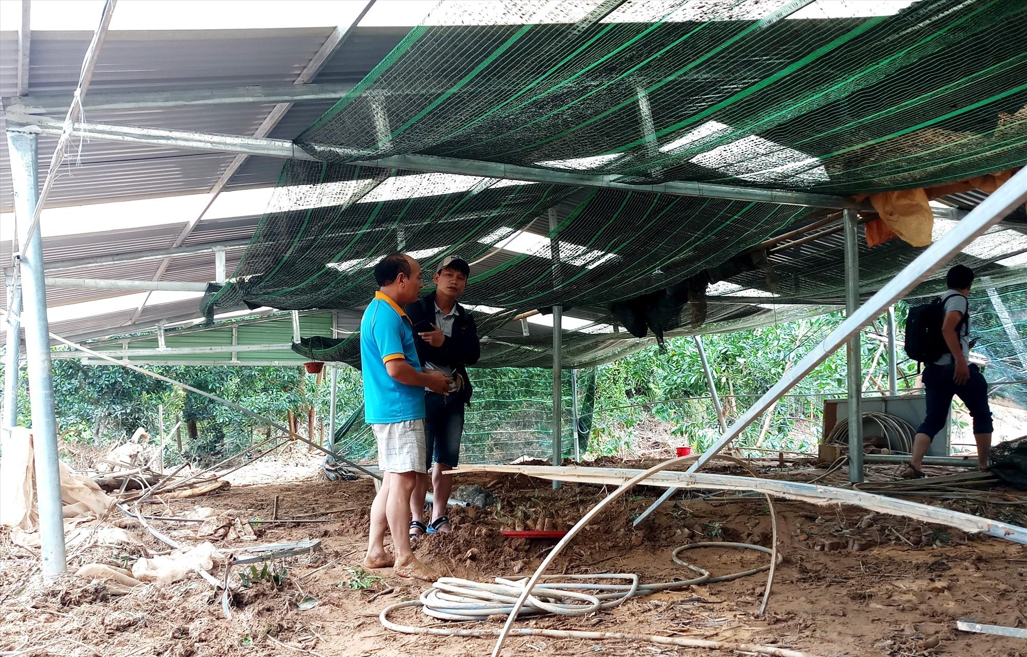 Trang trại chuyên ươm cây giống ở xã A Tiêng bị lũ tràn, gây thiệt hại gần 1 tỷ đồng. Ảnh: A.N