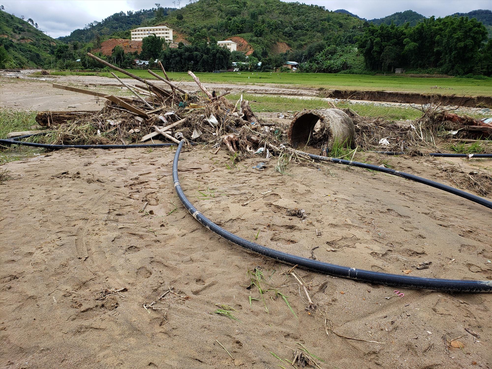 Ống nước, cây gỗ bị cuốn trôi nằm trên ruộng lúa. Ảnh: THANH THẮNG