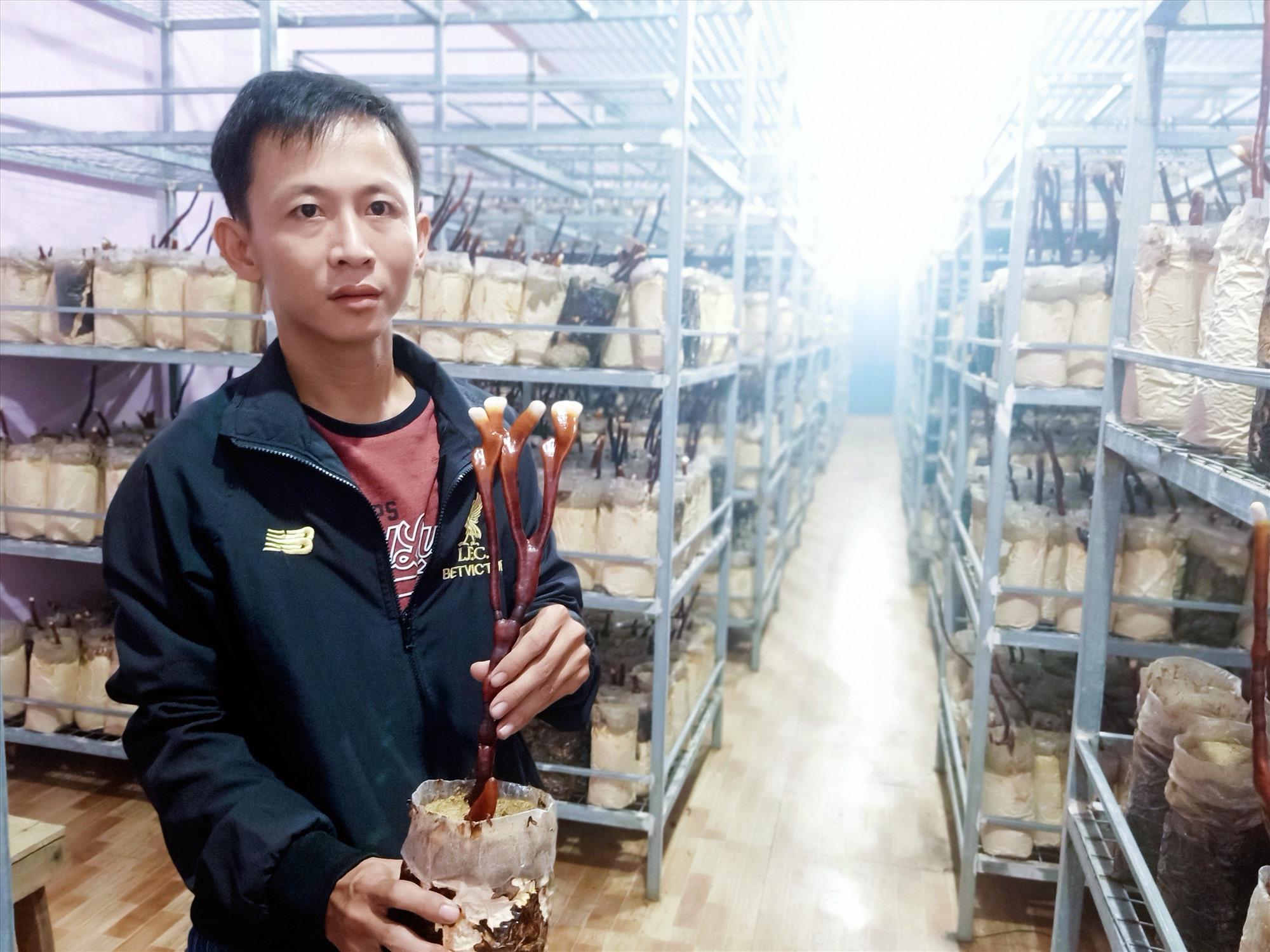 Cơ sở trồng nấm linh chi sừng hươu và nấm mối đen của anh Nguyễn Hữu Nghĩa. Ảnh: H.LIÊN