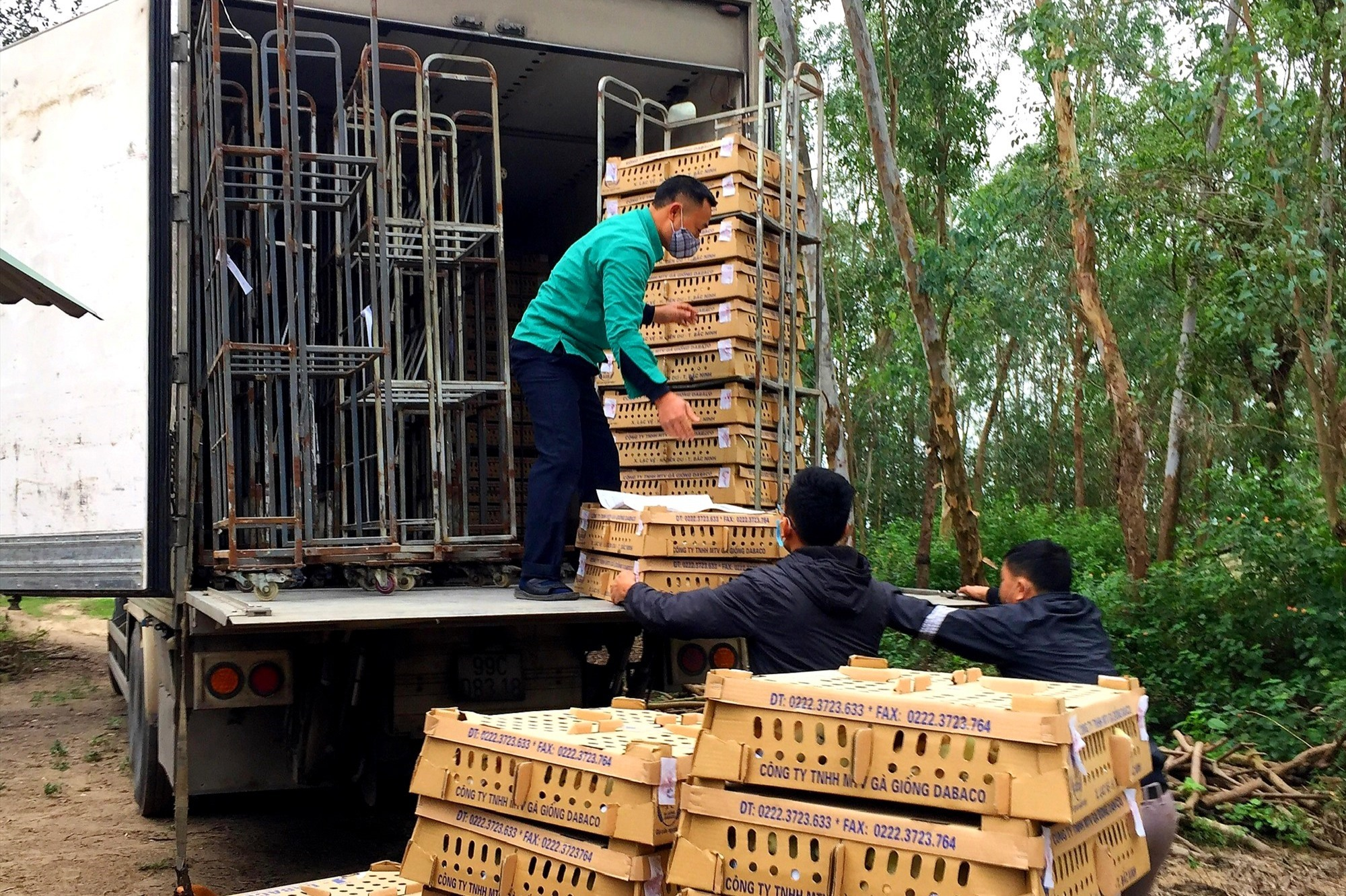 Chi cục Chăn nuôi & thú y vận chuyển gà con giống đi phân bổ cho các địa phương. Ảnh: CNTY