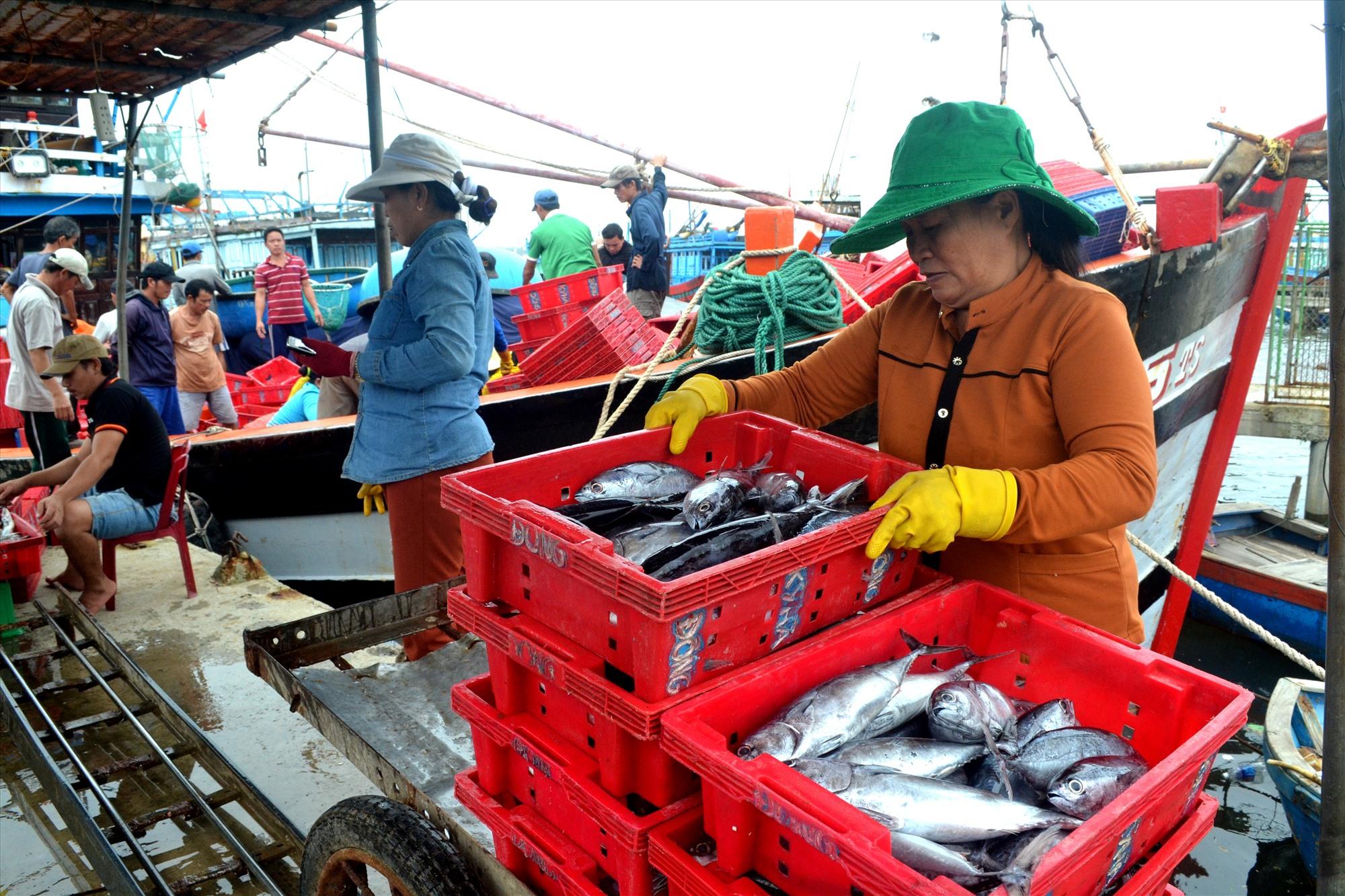 Sản lượng khai thác thủy sản đóng góp từ 30 – 35% thu nhập trong ngành nông nghiệp của huyện Thăng Bình. Ảnh: M.T