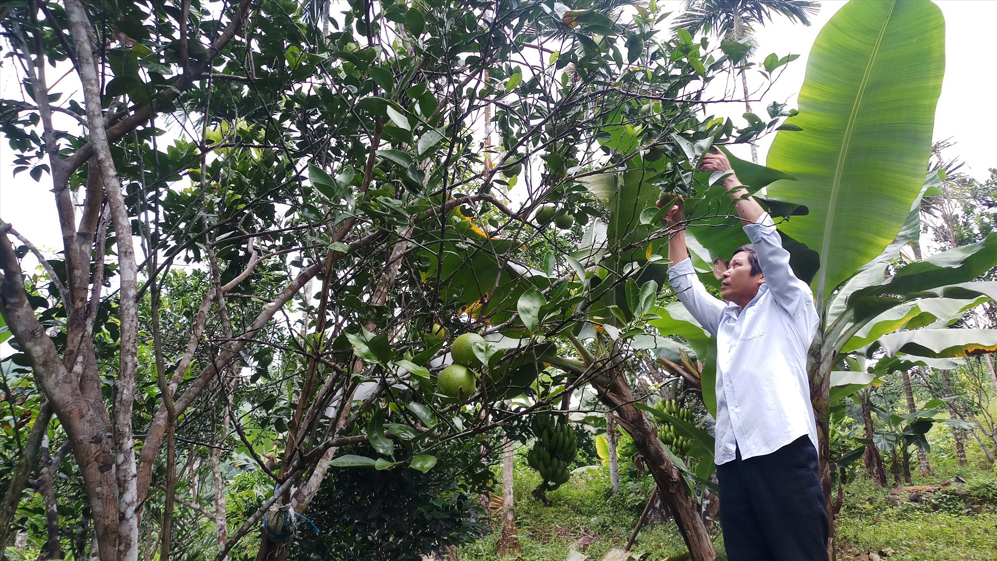 Đề án 03 của huyện đã tạo cú hích cho người dân phát triển kinh tế vườn, kinh tế trang trại.