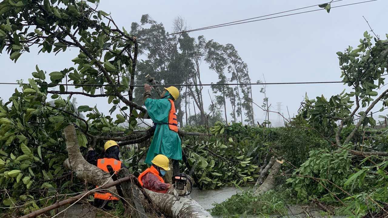 Hàng loạt các loại cây chạm đường dây điện & có nguy cơ ngã đổ vào đường dây. Ảnh: T.L