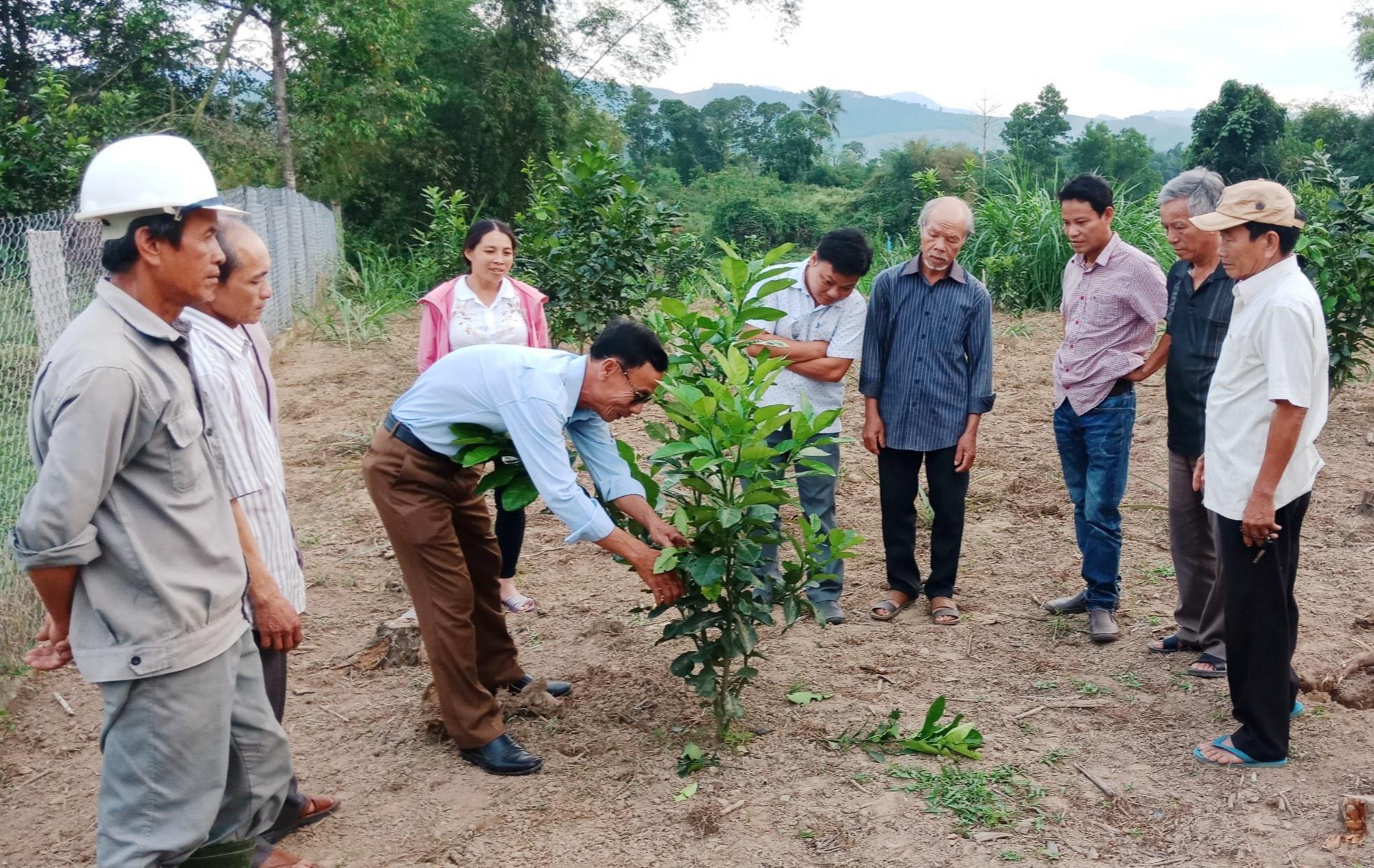 Ngành chuyên môn của huyện Nông Sơn thường xuyên hướng dẫn người dân kỹ thuật trồng, chăm sóc và phòng trừ dịch hại cho vườn cây ăn quả. Ảnh: Đ.N