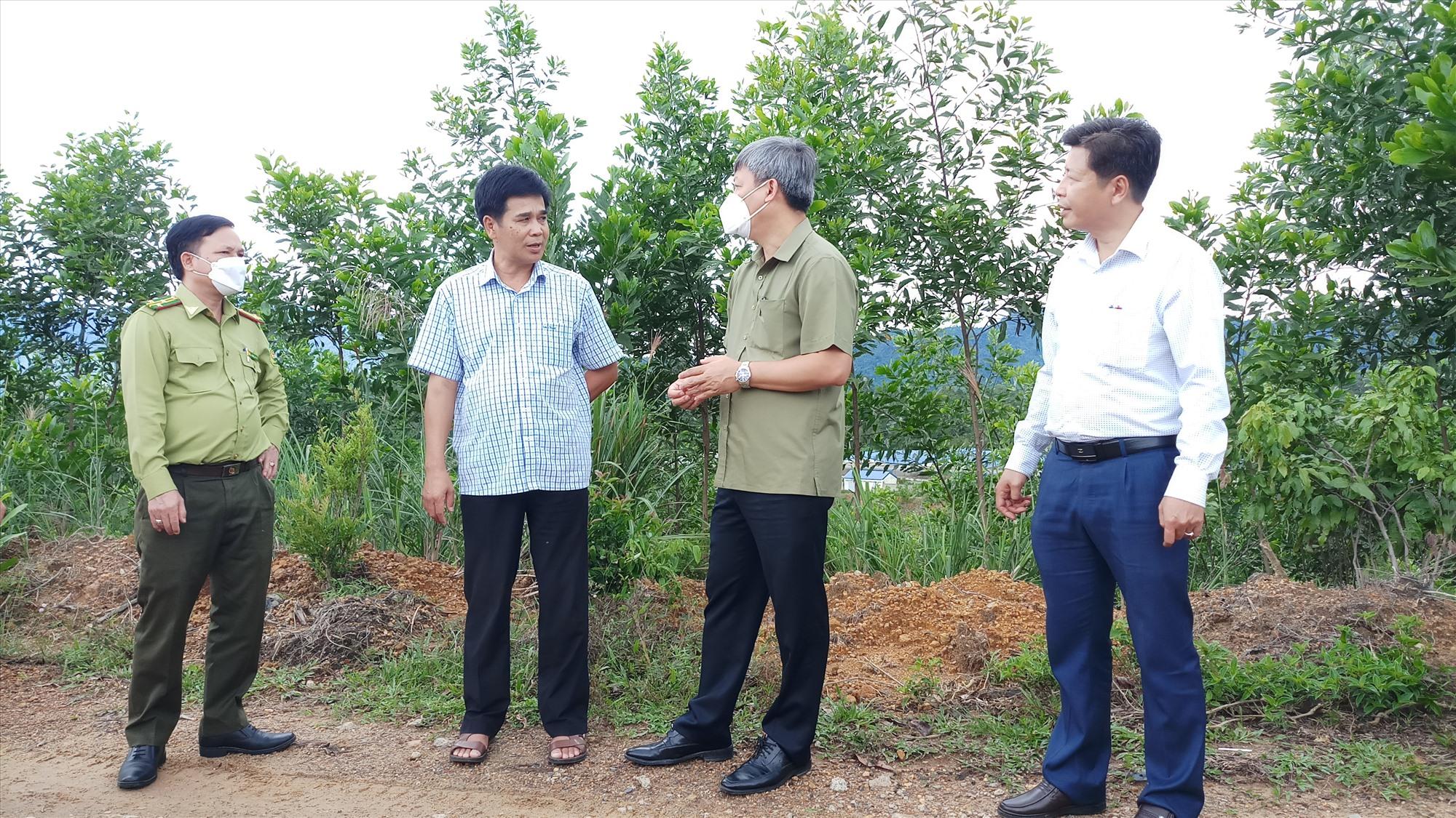 Kiểm tra đất lâm nghiệp trồng cao su sau thời gian bỏ hoang đã bị người dân lấn chiếm, Phó Chủ tịch UBND tỉnh Hồ Quang Bửu yêu cầu địa phương cần có phương án giải quyết cụ thể theo quy định của pháp luật. Ảnh: A.N