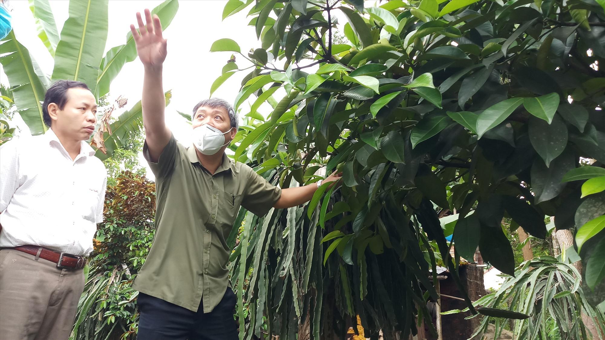 Phó Chủ tịch UBND tỉnh Hồ Quang Bửu bày tỏ thích thú khi vô tình phát hiện cây măng cụt tại vườn của một hộ dân. Ảnh: A.N