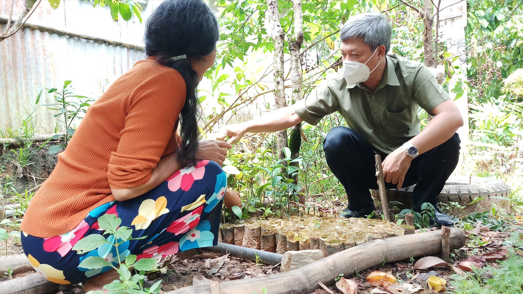 Đồmg chí Hồ Quang Bửu trực tiếp hướng dẫn người dân kỹ thuật ươm trồng, chăm sóc cây măng cụt. Ảnh: A.N