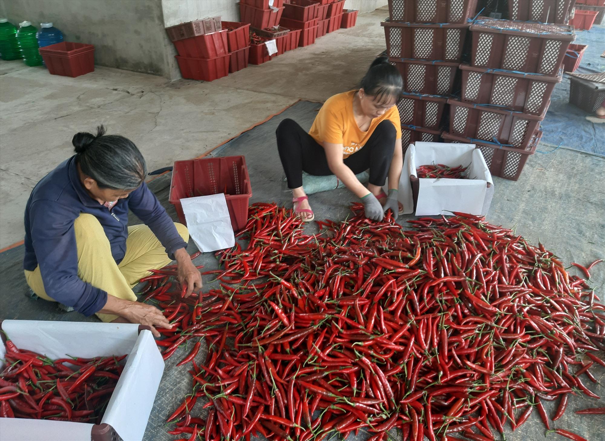 Nhiều sản phẩm của Quảng Nam có khả năng tham gia vào chuỗi cung ứng cho TP.Hà Nội.    Ảnh: N.P