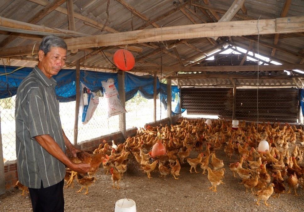 Sản xuất nông nghiệp ở huyện Thăng Bình thu được kết quả khá cao trong thời gian qua. Ảnh: Q.VIỆT