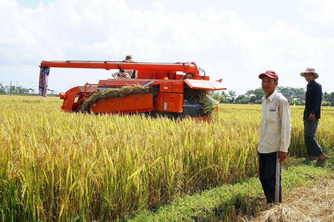 Cơ giới hóa giúp quá trình liên kết sản xuất, kinh doanh của các HTX trên địa bàn huyện Thăng Bình được thuận lợi. Ảnh: VIỆT NGUYỄN