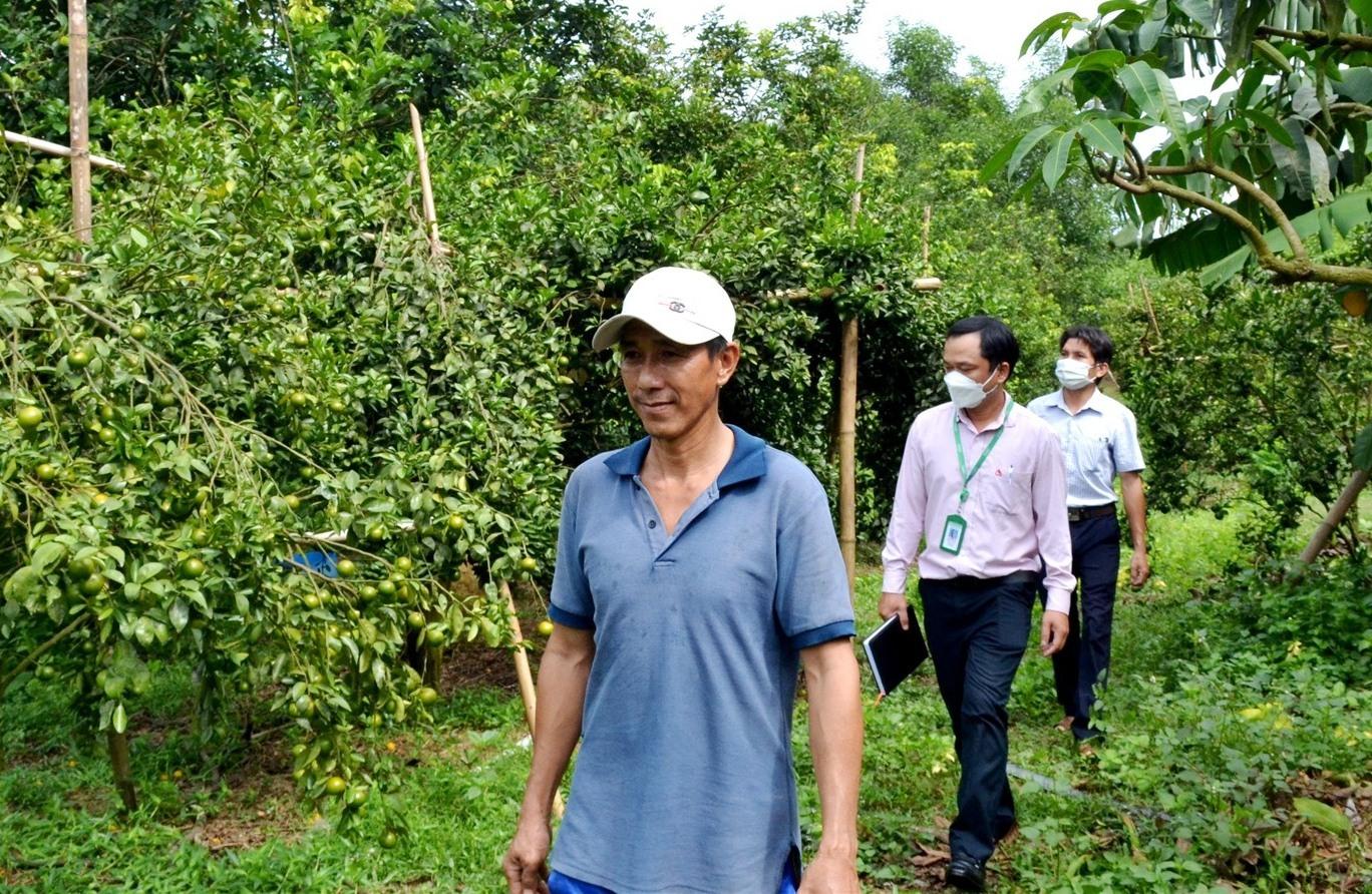 Tính dụng chính sách giúp người dân Núi Thành xây dựng mô hình kinh tế hiệu quả, vươn lên thoát nghèo bền vững. Ảnh: Q.VIỆT